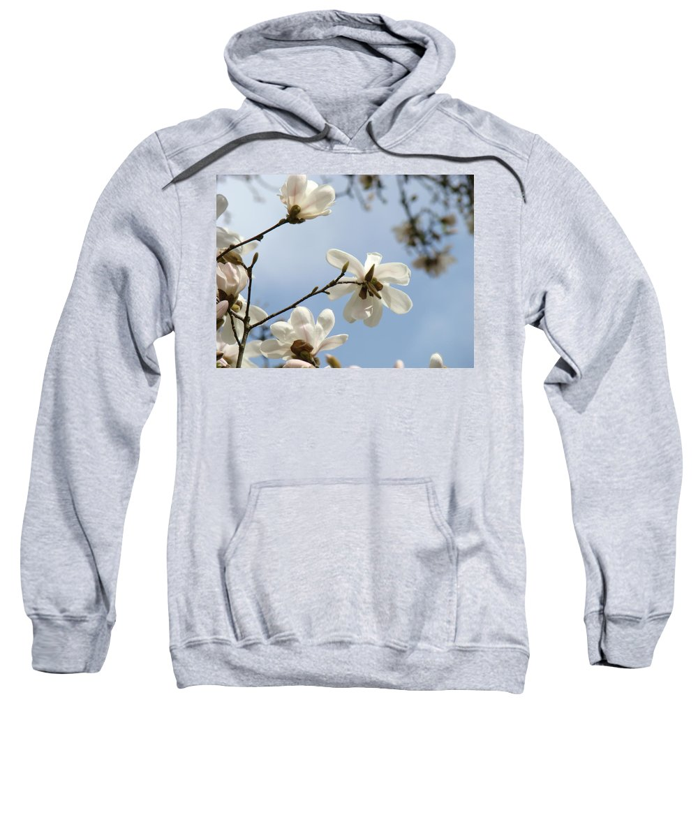 Magnolia Sweatshirt featuring the photograph Magnolia Flowers White Magnolia Tree Spring Flowers Artwork Blue Sky by Baslee Troutman