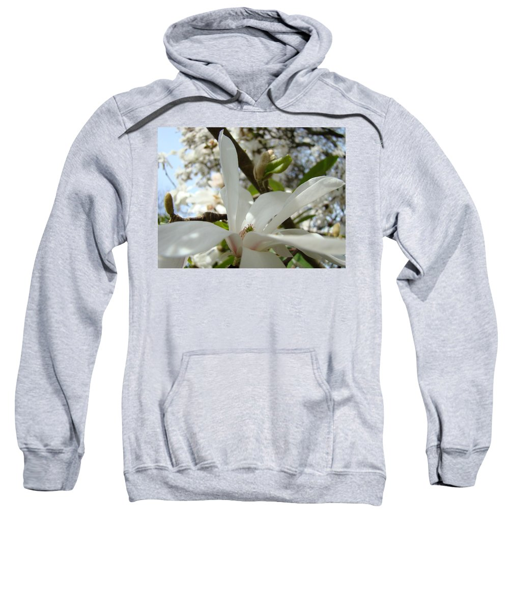 Magnolia Sweatshirt featuring the photograph Magnolia Tree Flowers Art Prints White Magnolia Flower by Baslee Troutman