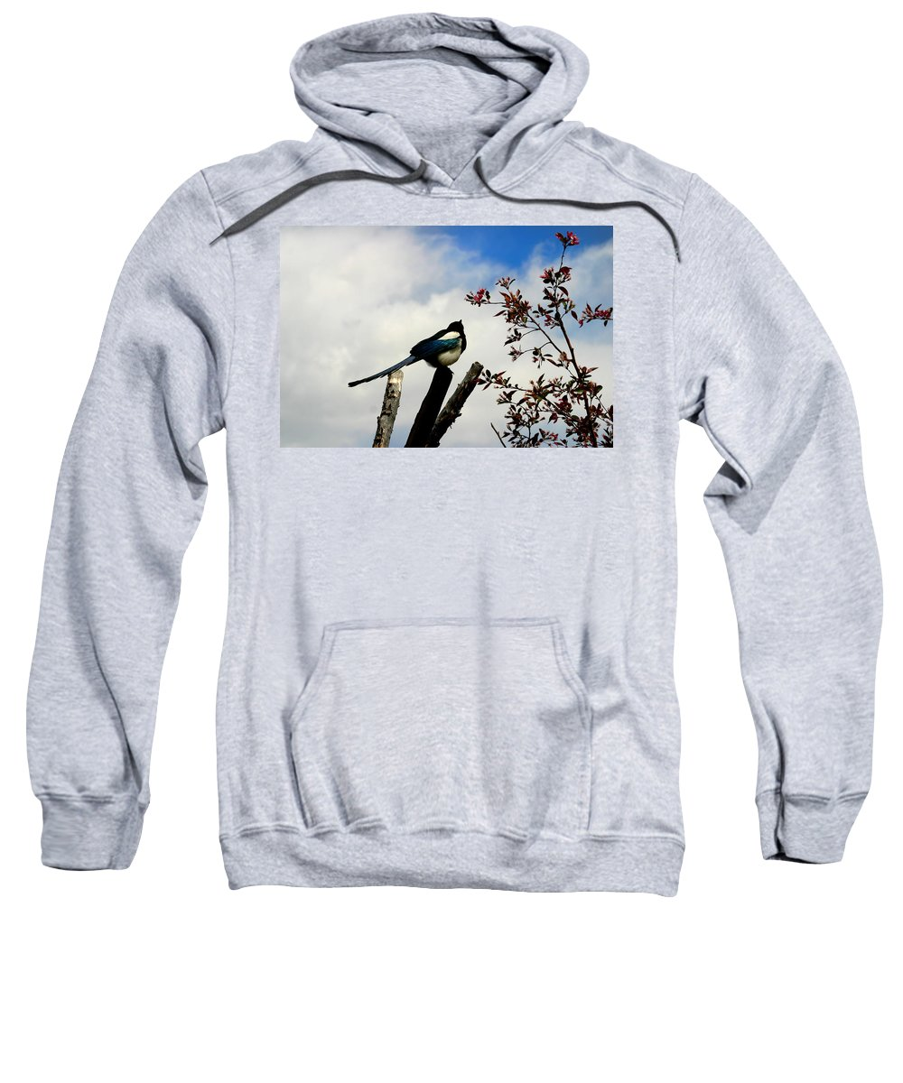 Magpie Sweatshirt featuring the photograph Magpie by Anthony Jones