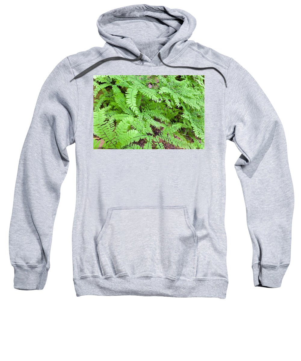 Maidenhari Ferns Sweatshirt featuring the photograph Maidenhair Ferns In Columbia River Gorge Closeup by Jit Lim