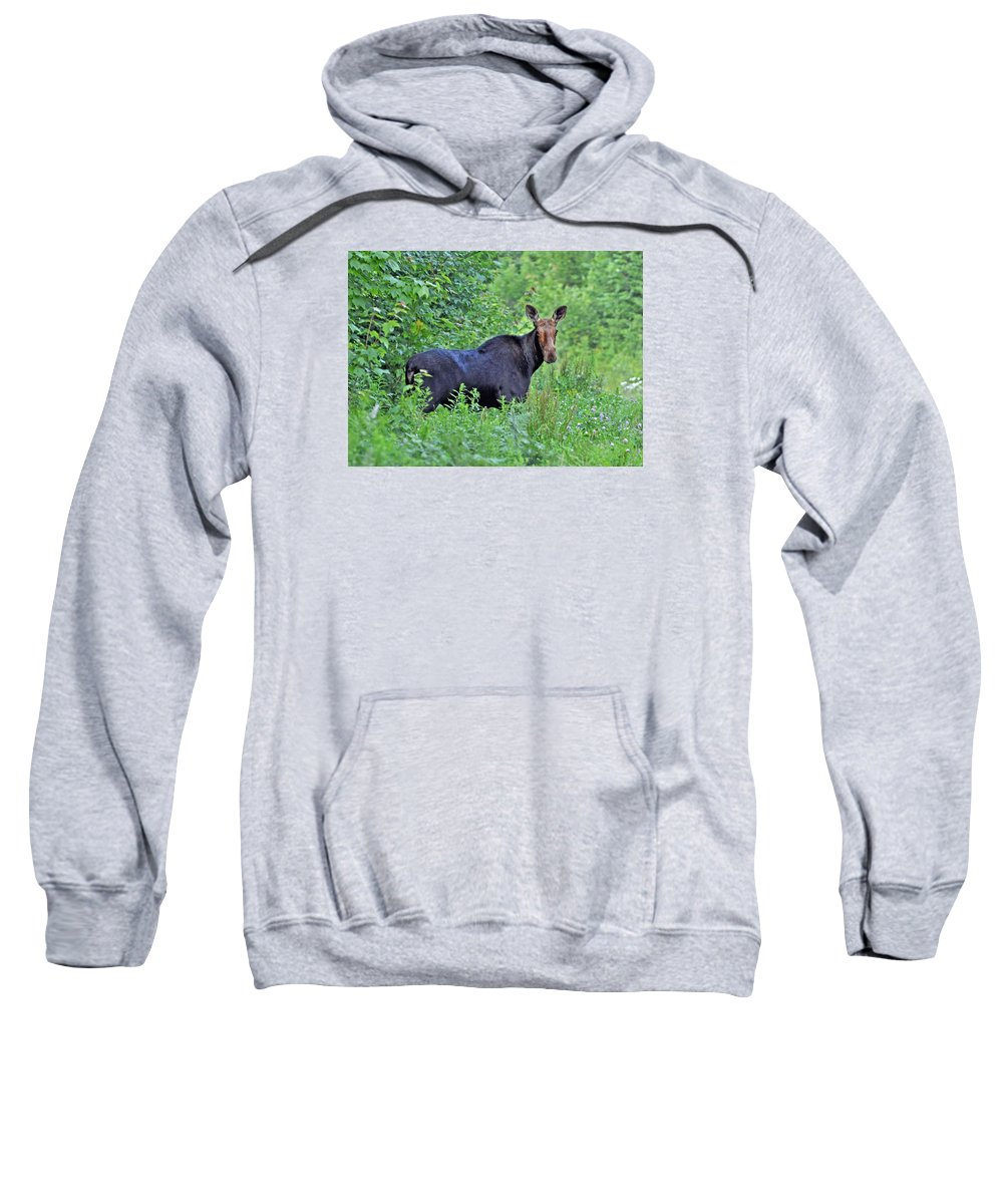Maine Sweatshirt featuring the photograph Maine Moose by Glenn Gordon