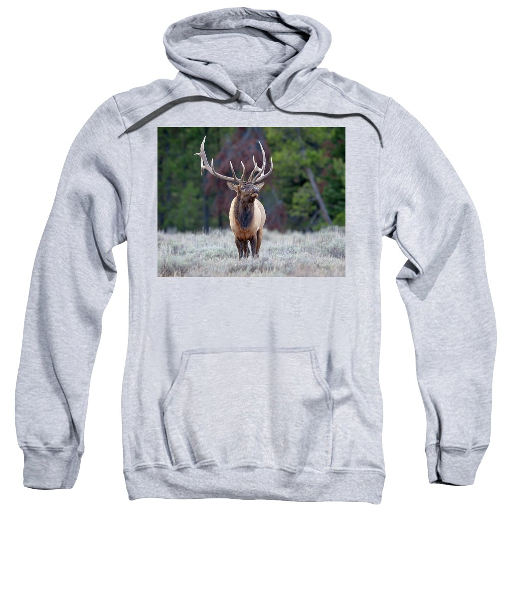 Bull Elk Sweatshirt featuring the photograph Majestic Bull Elk by Jack Bell