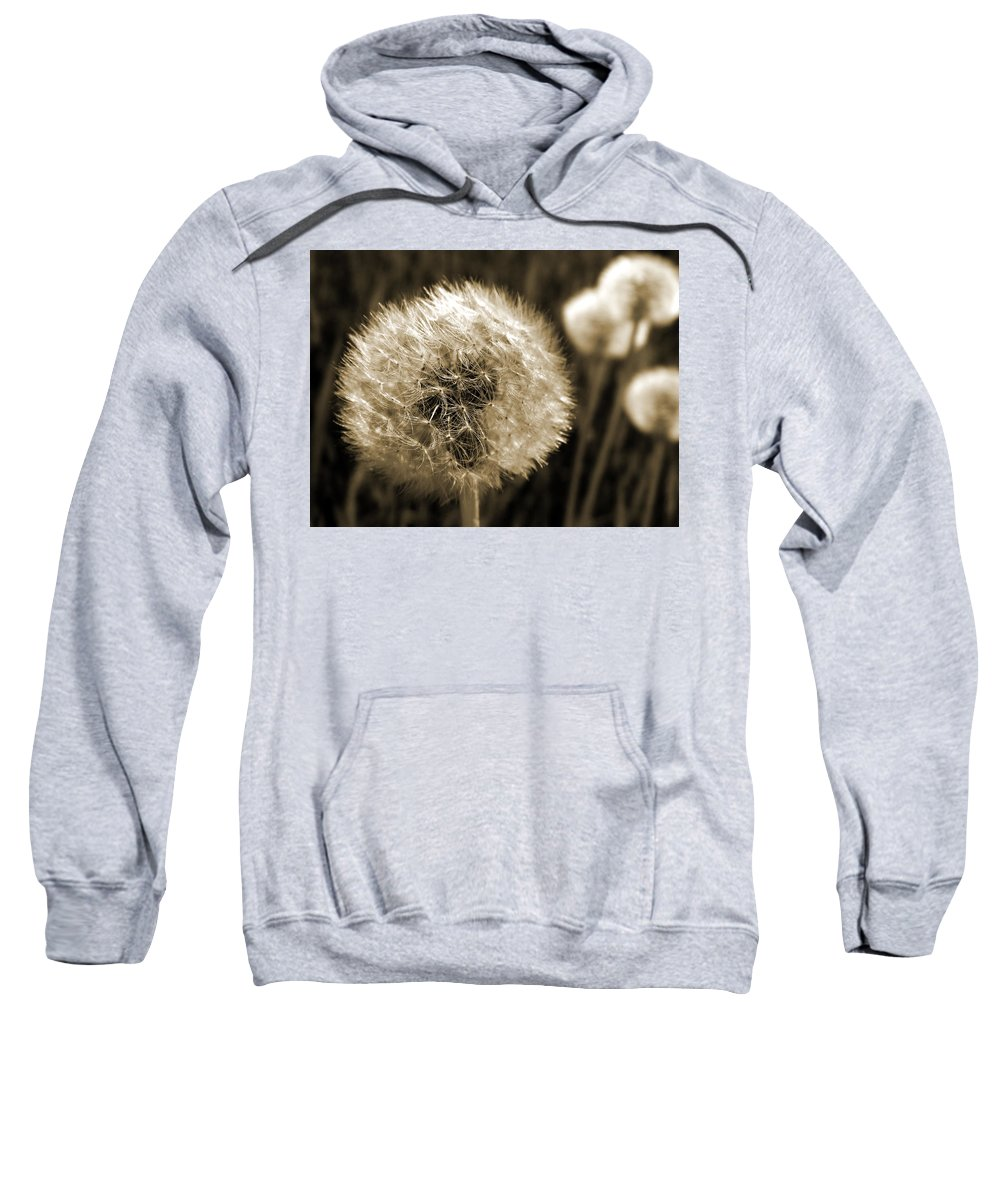 Dandelion Sweatshirt featuring the photograph Make-a-wish Dandelion Sepia by David T Wilkinson
