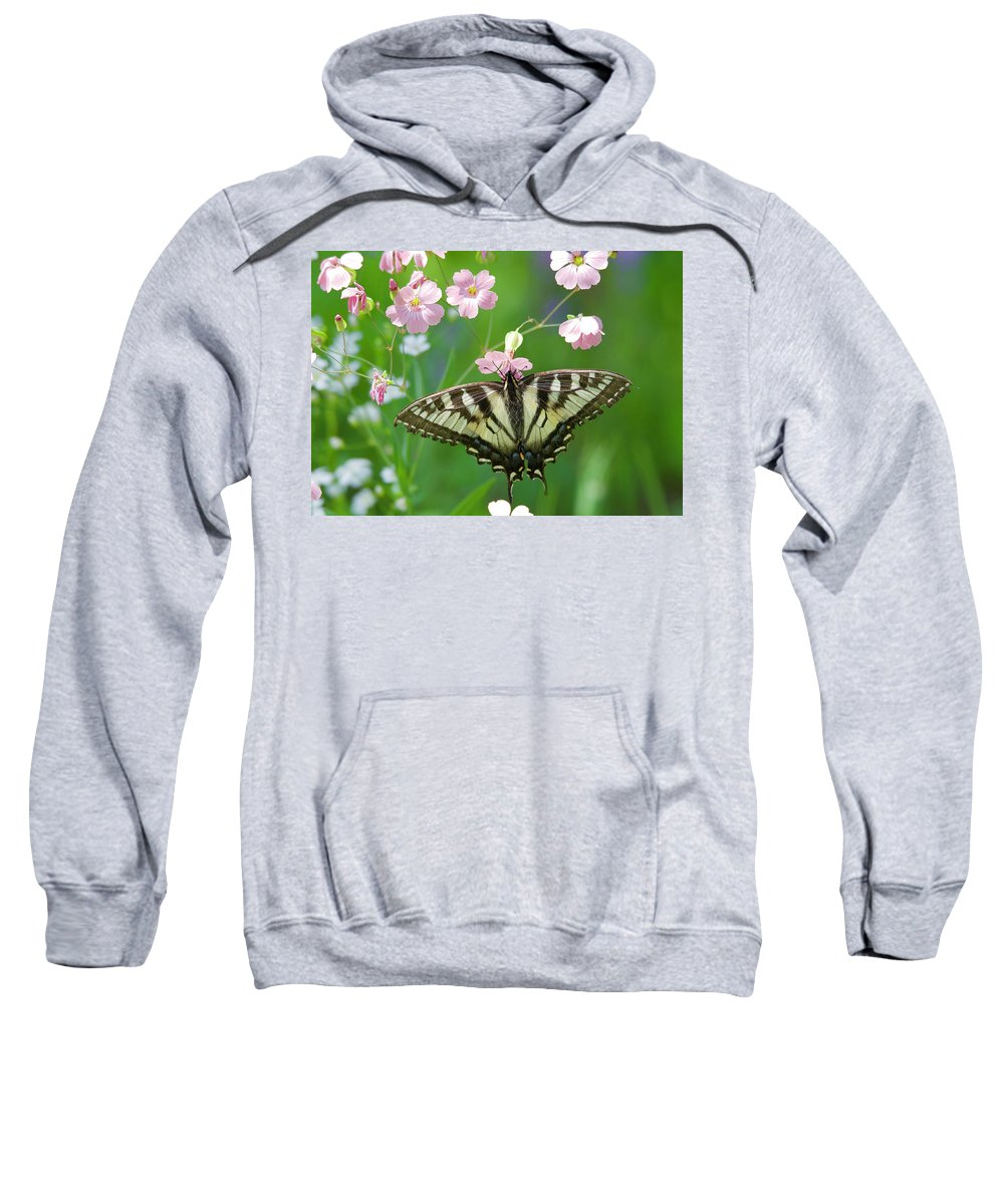 Butterfly Sweatshirt featuring the photograph Male Tiger Swallowtail 5416 by Michael Peychich