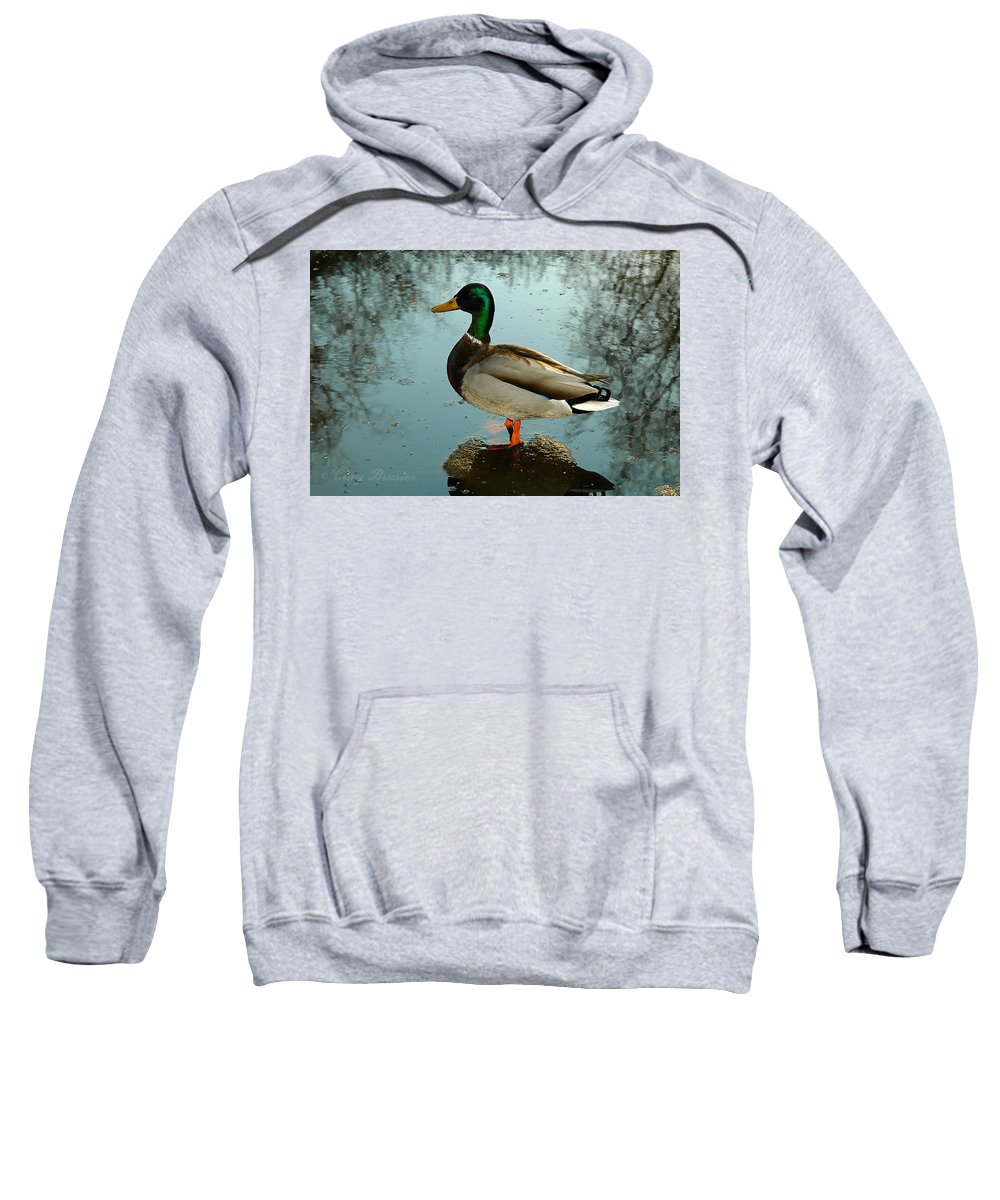 Clay Sweatshirt featuring the photograph Mallard by Clayton Bruster