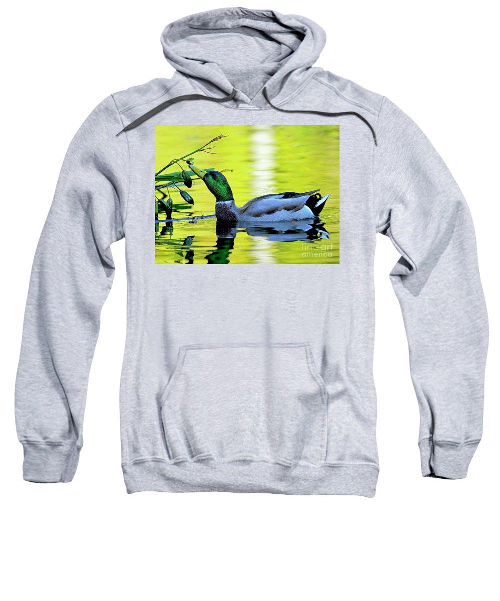 Mallard Sweatshirt featuring the photograph Mallard Eating Seed Pod 2 by Sharon Talson