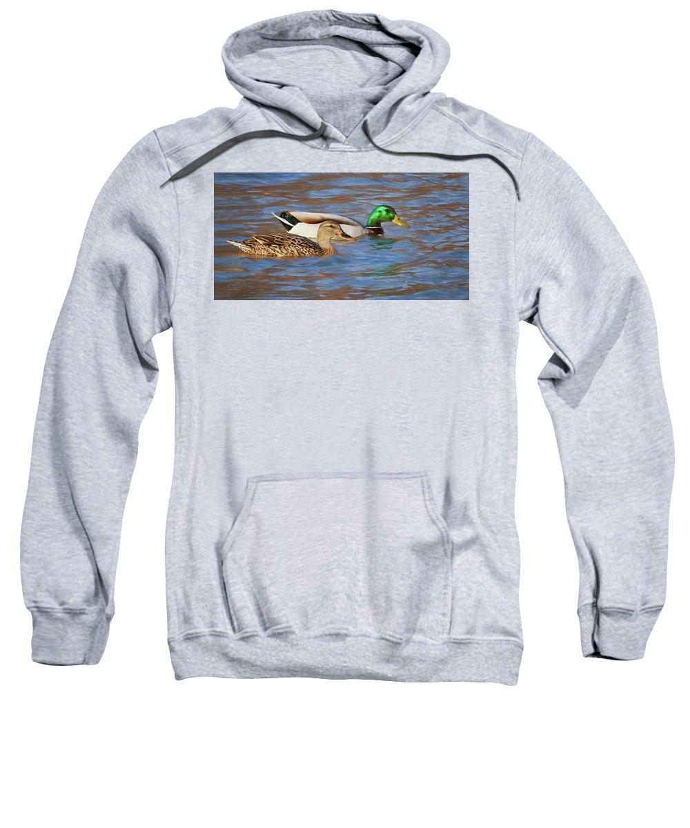 Wild Duck Sweatshirt featuring the photograph Mallard Pair by Nikolyn McDonald