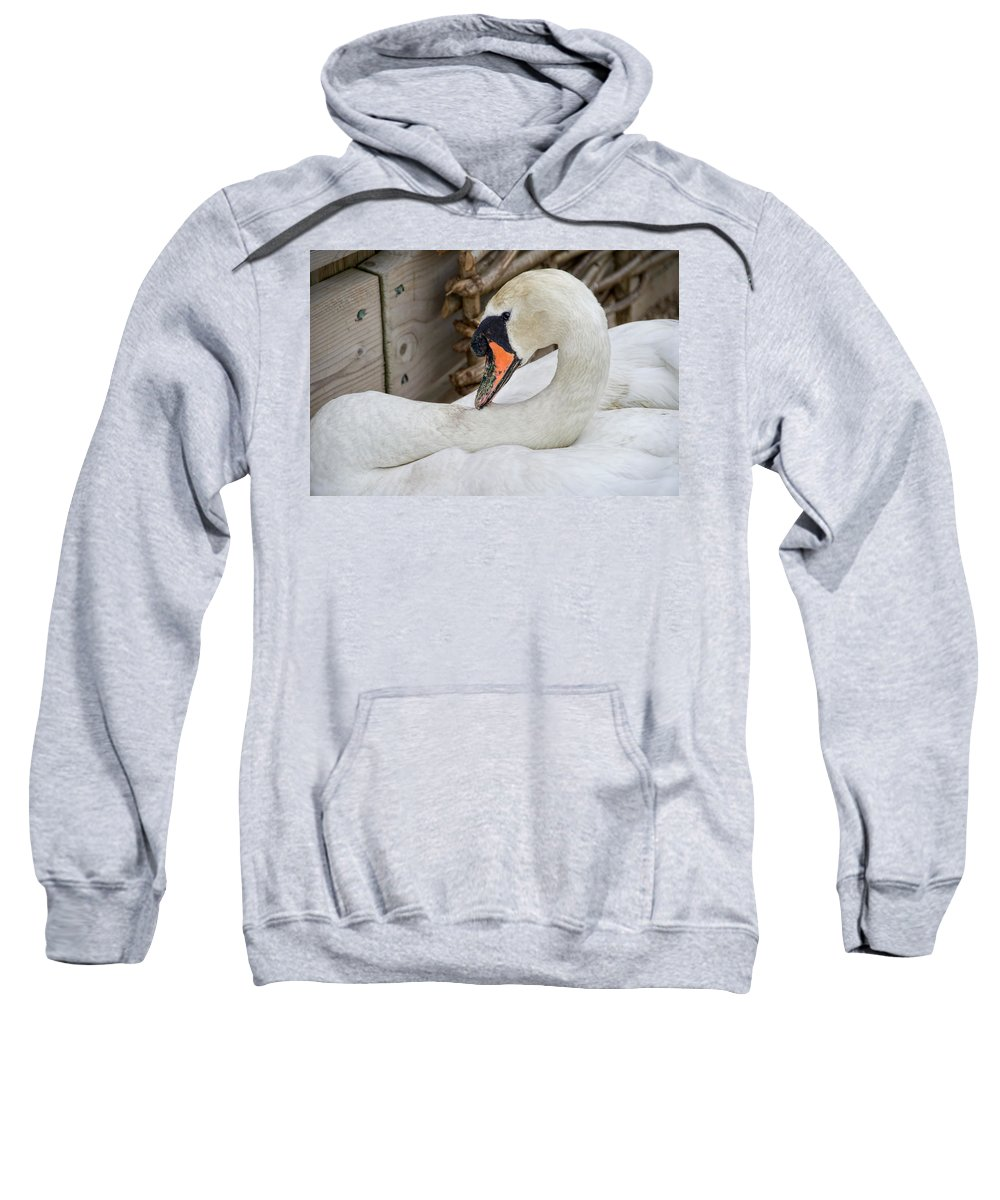 Mute Sweatshirt featuring the photograph Mama Swan At Abbotsbury by Susie Peek