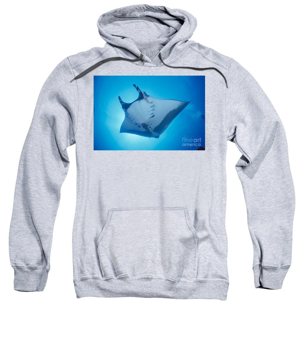 Baja Sweatshirt featuring the photograph Manta Ray by Ed Robinson - Printscapes