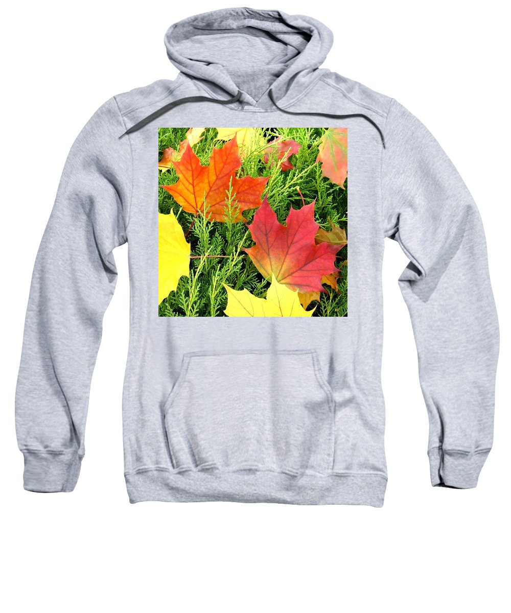 Autumn Sweatshirt featuring the photograph Maple Mania 5 by Will Borden