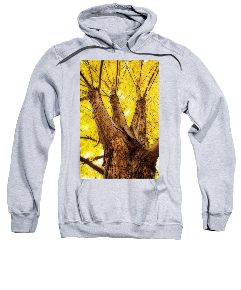 Autumns Sweatshirt featuring the photograph Maple Tree Portrait 2 by James BO Insogna