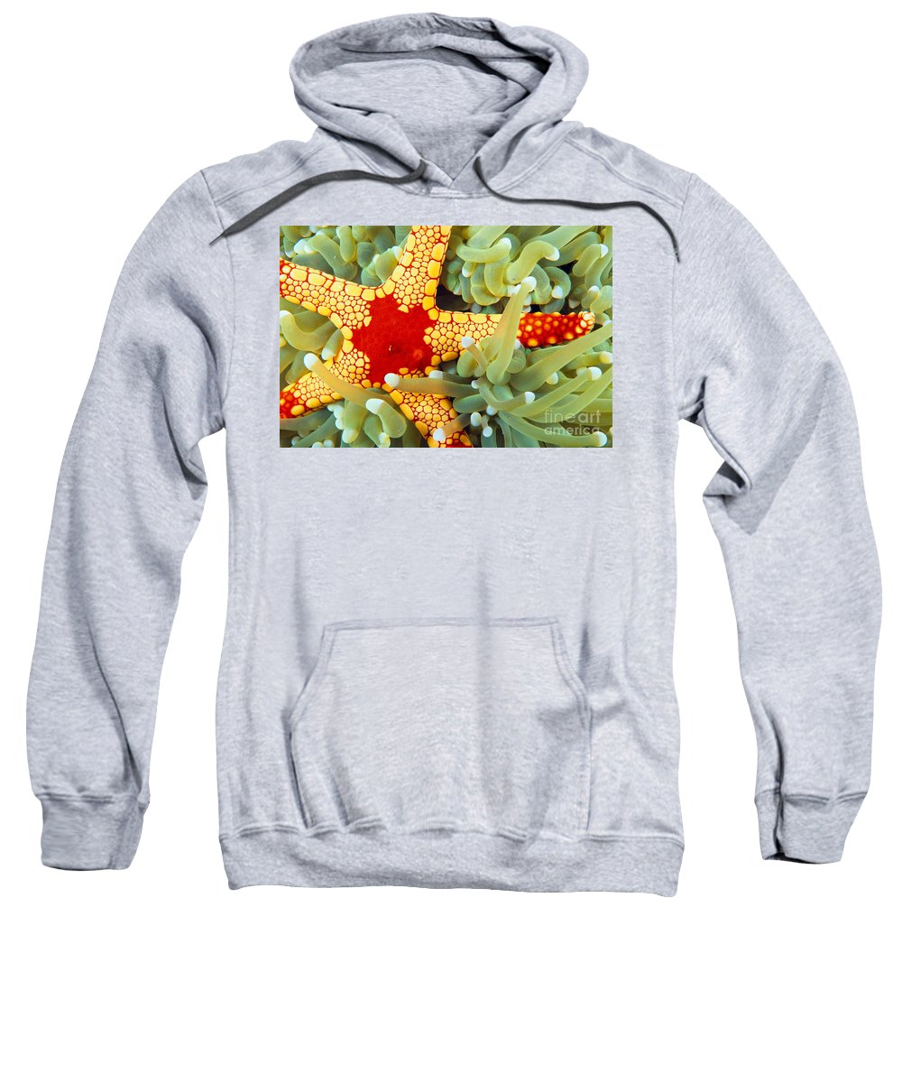 30-pfs0125 Sweatshirt featuring the photograph Marine Life, Close-up by Dave Fleetham - Printscapes