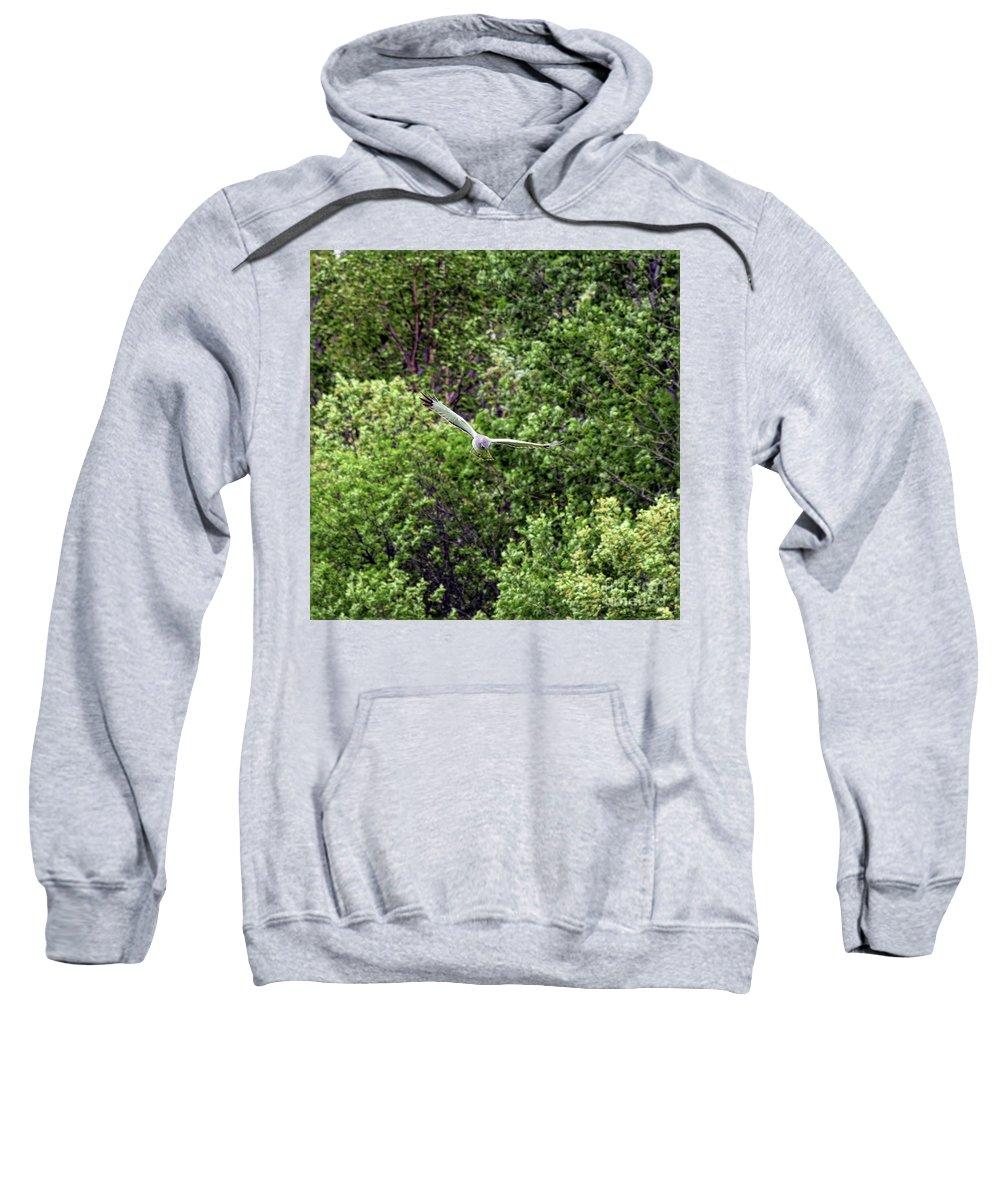 Marsh Hawk Sweatshirt featuring the photograph Marsh Hawk 3 by William Tasker