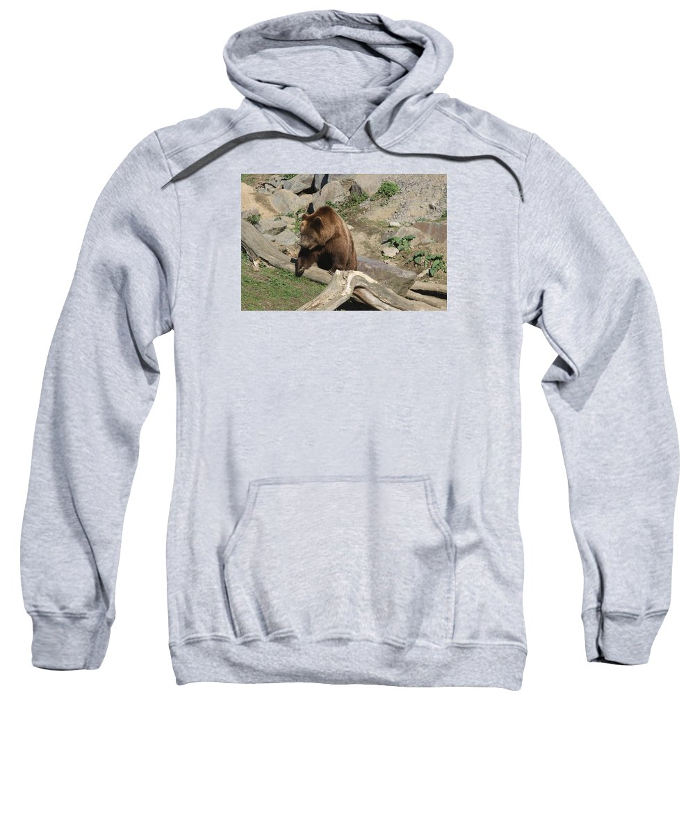 Bear Sweatshirt featuring the photograph Master Bruin by Christiane Schulze Art And Photography