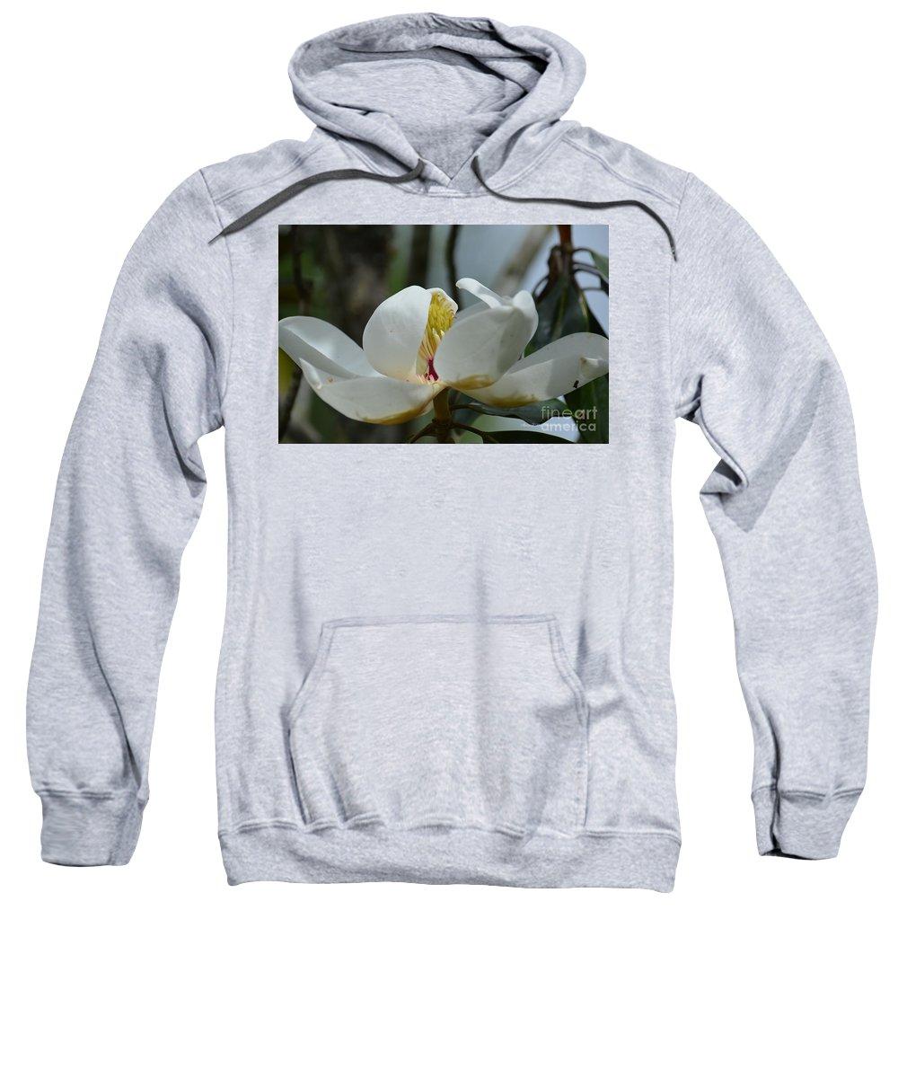 May Magnolia 2 Sweatshirt featuring the photograph May Magnolia 2 by Maria Urso