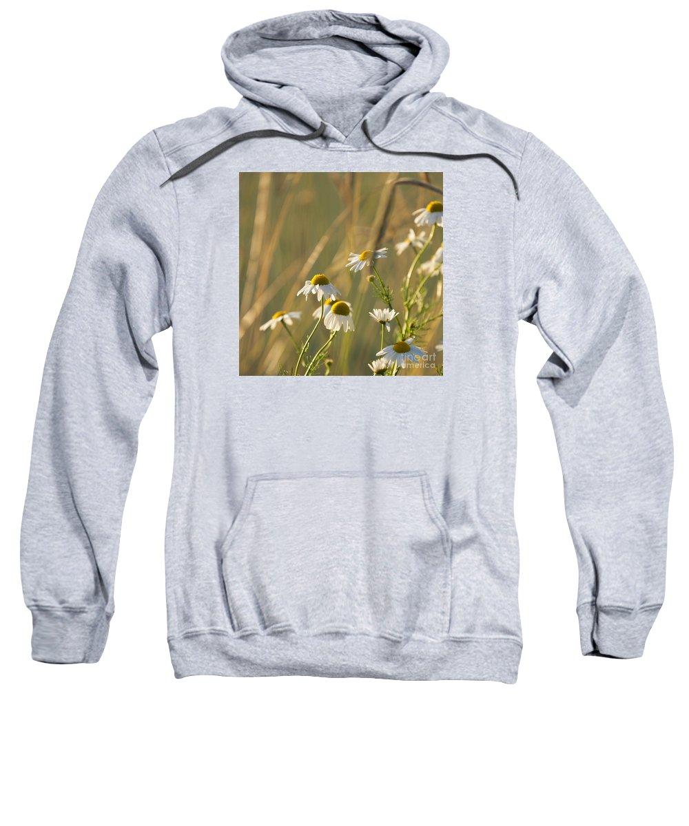 Mayweed Sweatshirt featuring the photograph Mayweed by Lasse Ansaharju