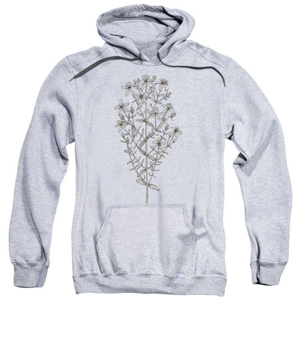 St. John's Wort Sweatshirt featuring the painting Medicinal Herb St John's Wort by Little Bunny Sunshine