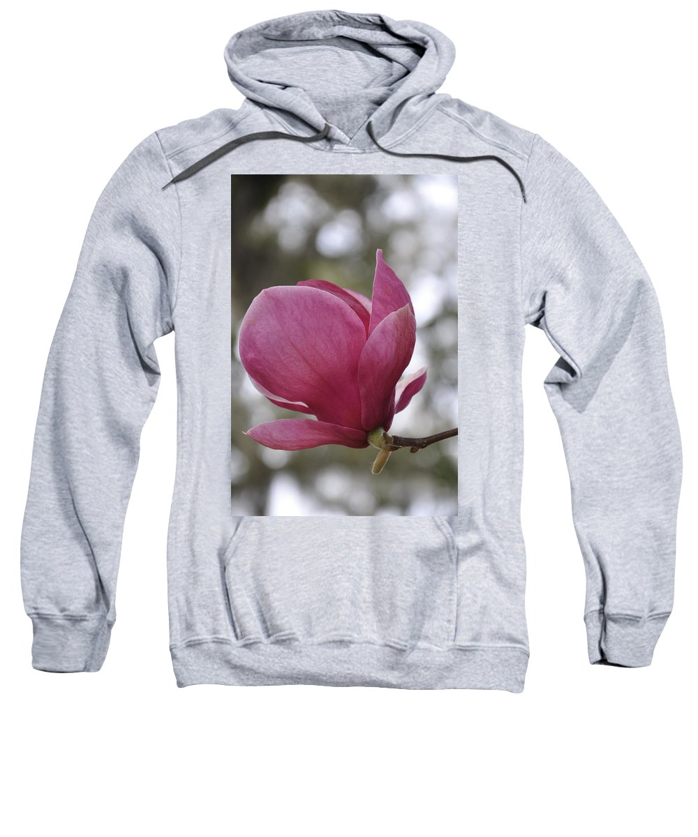 Sweatshirt featuring the photograph Mepkin Abbey Pink Magnolia by Sally Falkenhagen
