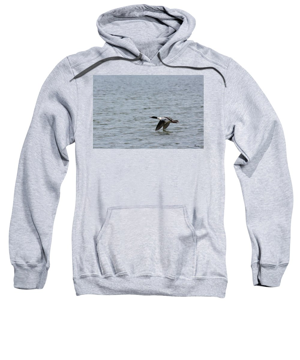 Common Merganser Duck Male Flying Along The Water Lake Piprell Lake Saskatchewan Canada Wild Life Nature Sweatshirt featuring the photograph Merganser Duck by Andrea Lawrence