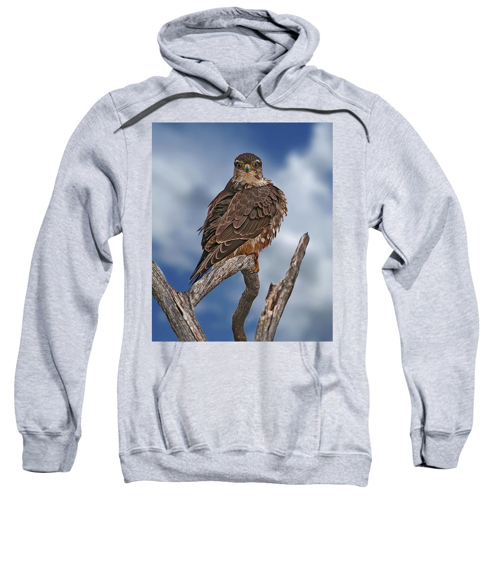 Merlin Sweatshirt featuring the photograph Merlin by Michael Cummings
