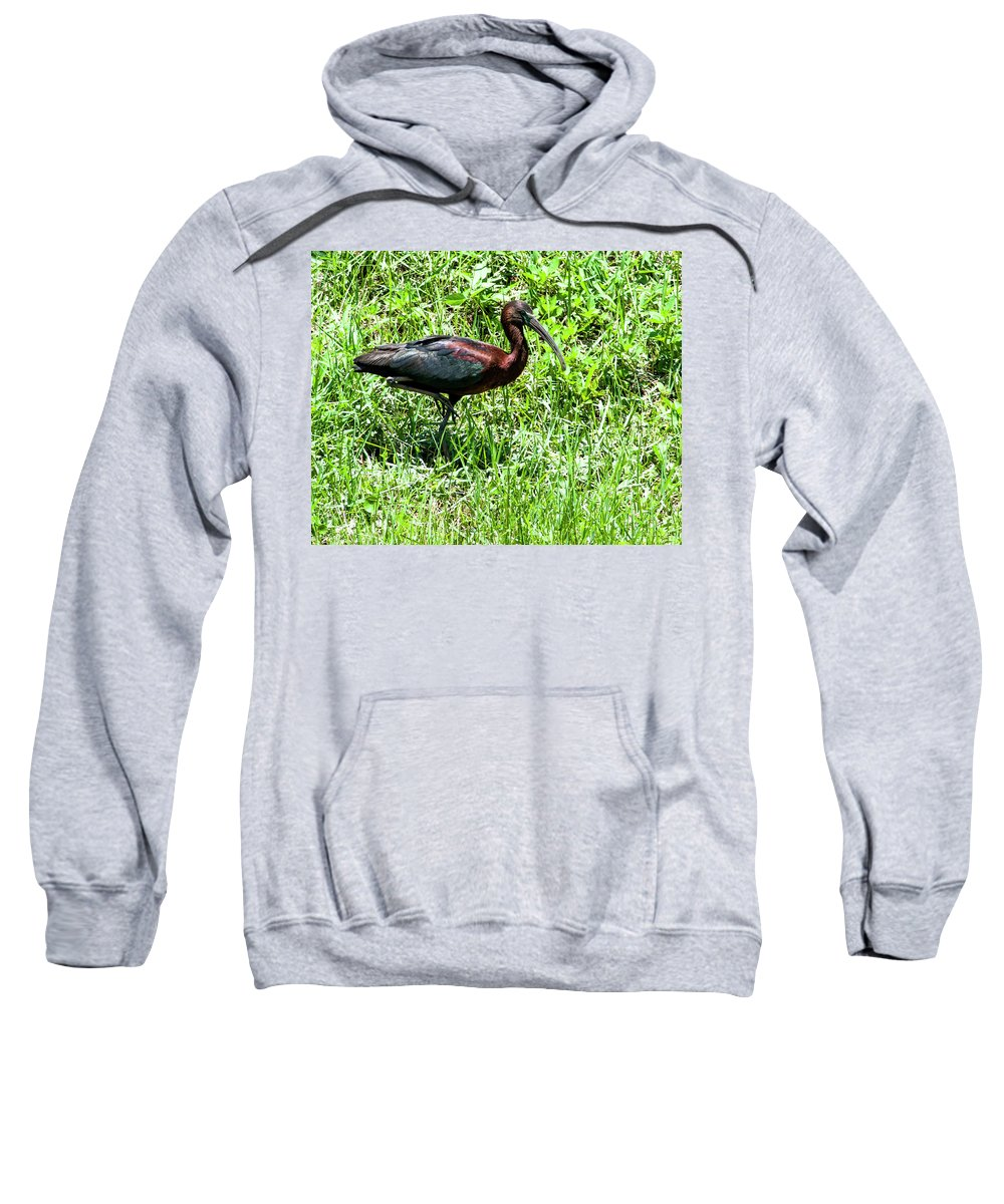 Glossy Ibis Sweatshirt featuring the photograph Metallic Colors by Norman Johnson