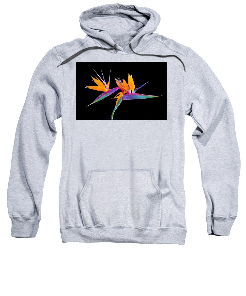 Bird Of Paradise Sweatshirt featuring the photograph Mexican Bird Of Paradise by Nicholas Romano