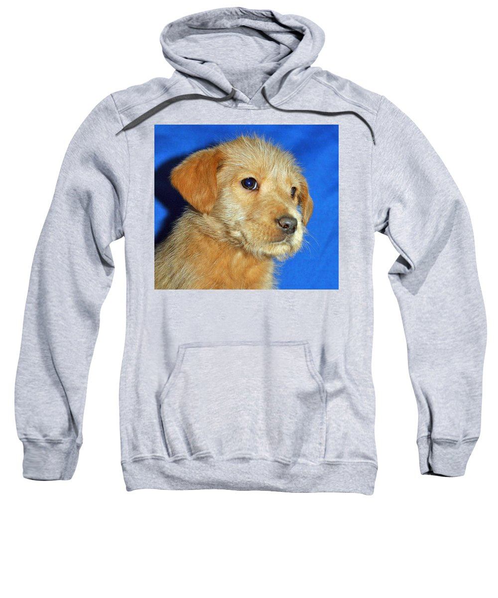 Dog Sweatshirt featuring the photograph Michael Portrait by Eric Liller
