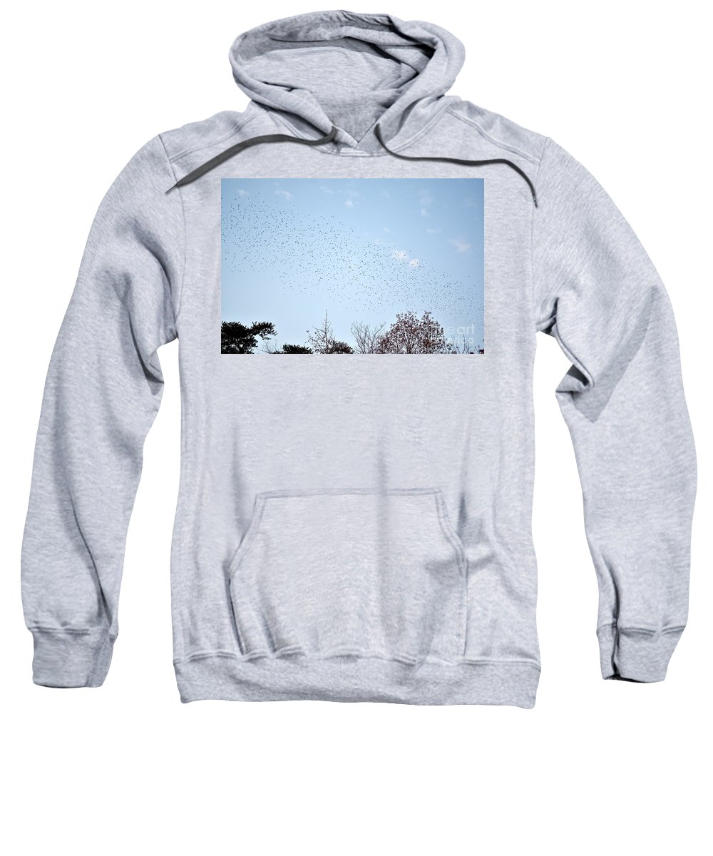 Birds Sweatshirt featuring the photograph Migrating Birds by Jeramey Lende