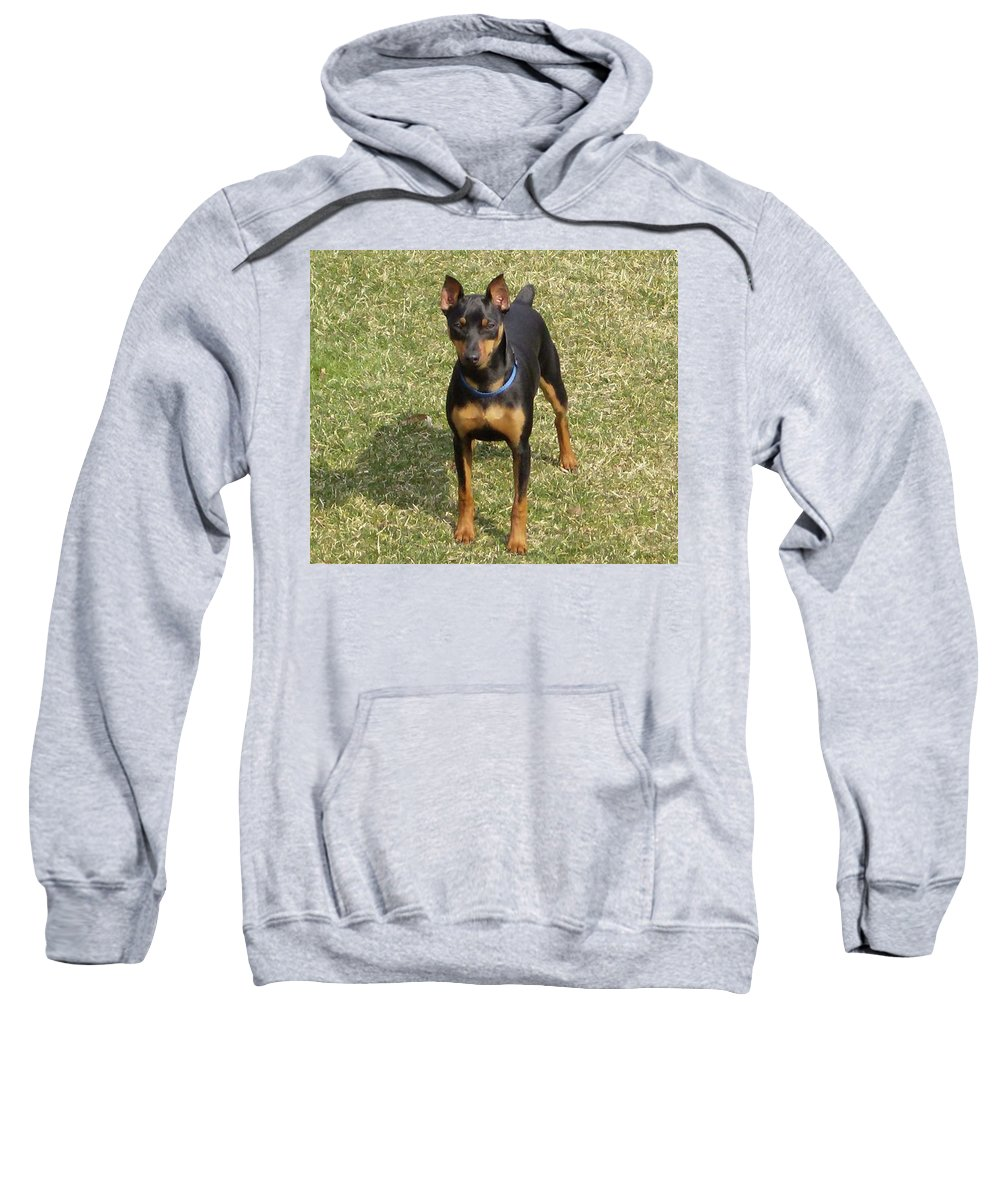 Mica Minature Pinscher Sweatshirt featuring the digital art Minature Pinscher Mica by Janie Norris