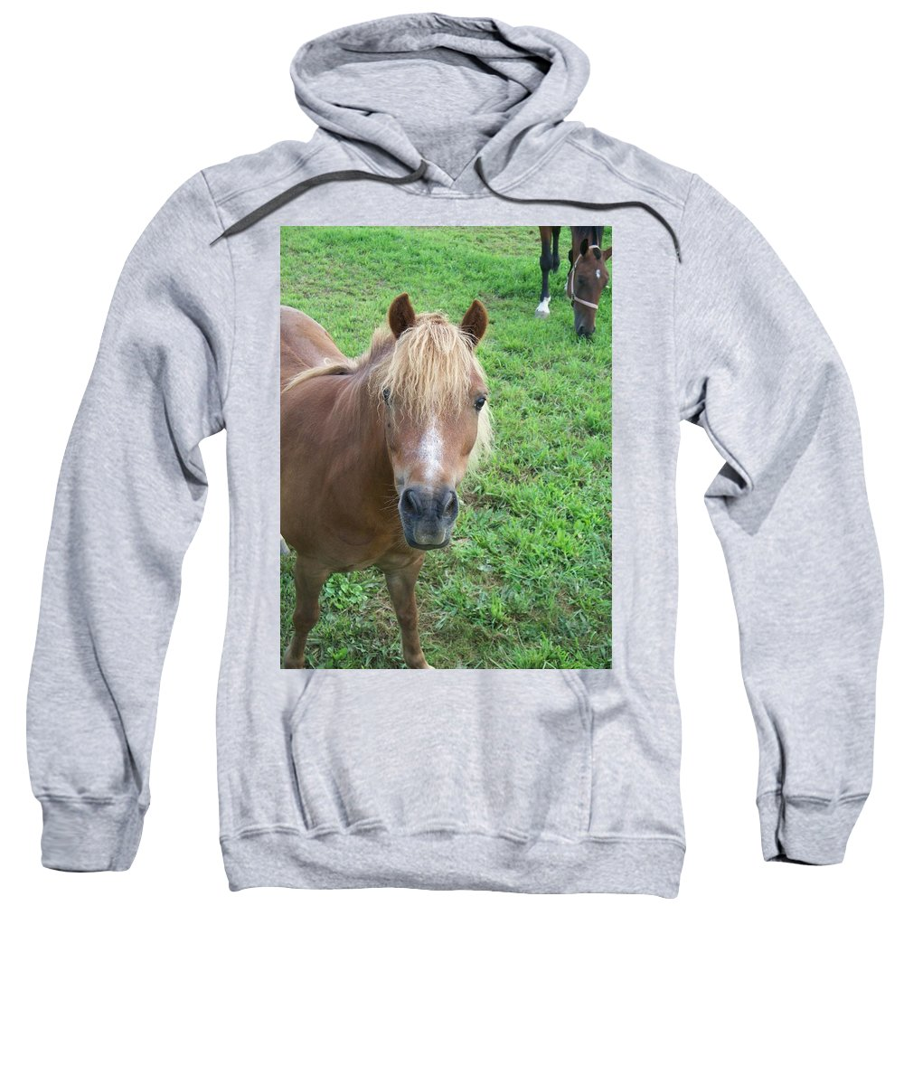 Miniture Sweatshirt featuring the painting Miniature Horse by Eric Schiabor