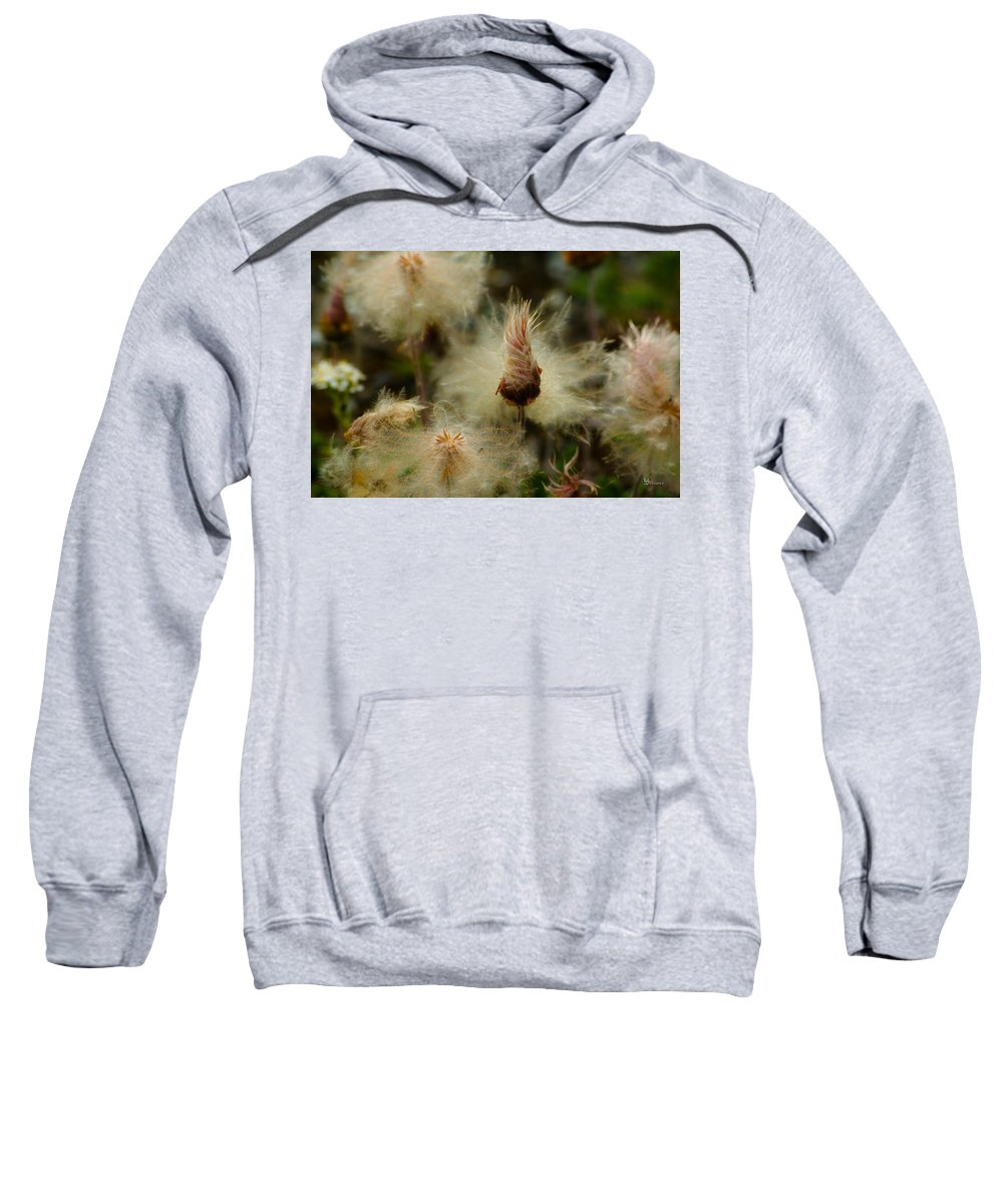 Blowball Sweatshirt featuring the photograph Miracle Flower by Max Steinwald