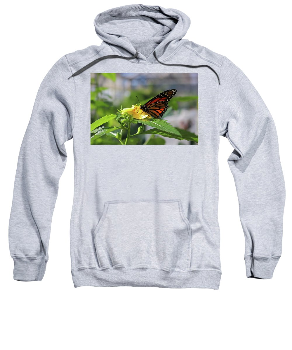 Monarch Sweatshirt featuring the photograph Mirthful Monarch by Michiale Schneider