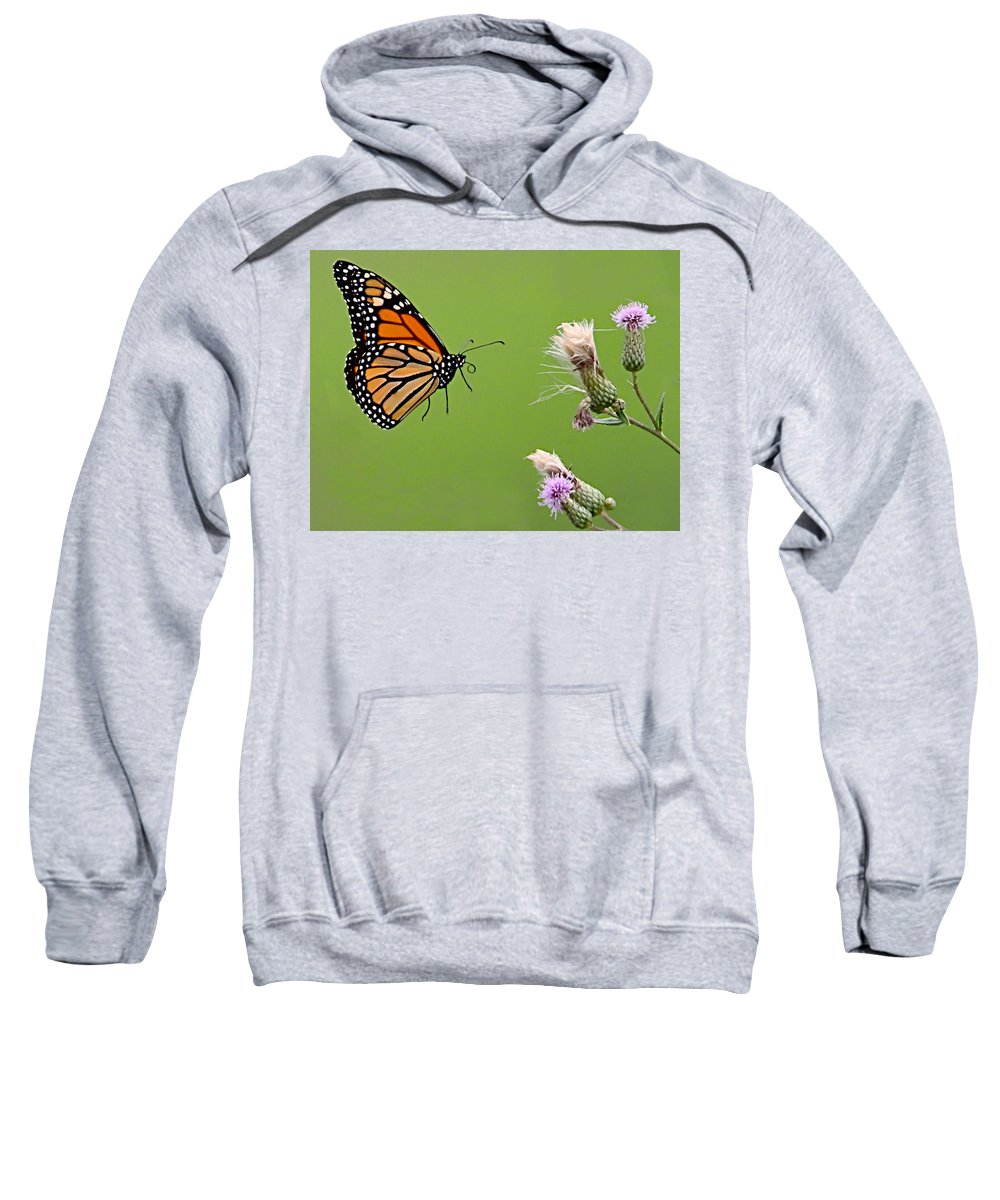 Butterfly Sweatshirt featuring the photograph Monarch Butterfly by William Jobes