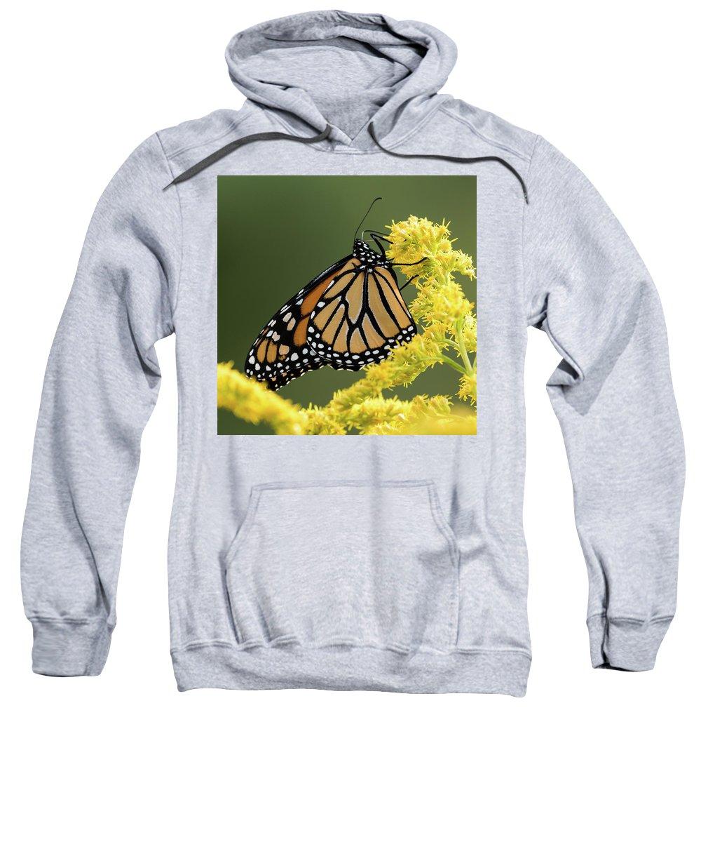 Monarch Butterfly Sweatshirt featuring the photograph Monarch On Goldenrod by Jurgen Lorenzen