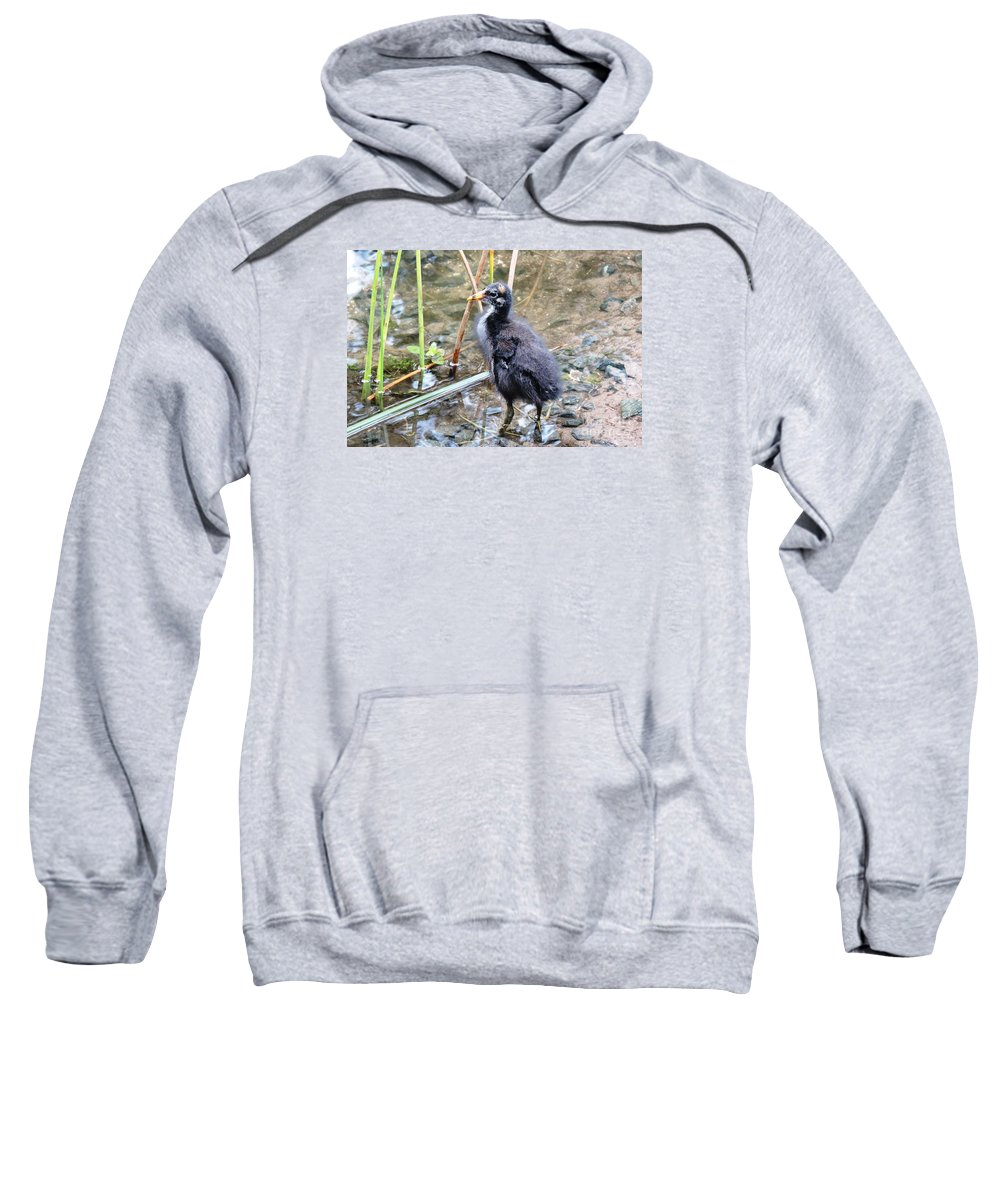 Long Toes Sweatshirt featuring the photograph Moorhen Chick by Beth Williams