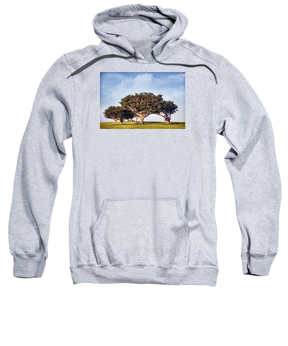 Trees Sweatshirt featuring the photograph Morning Glory Pntb by Theo O'Connor