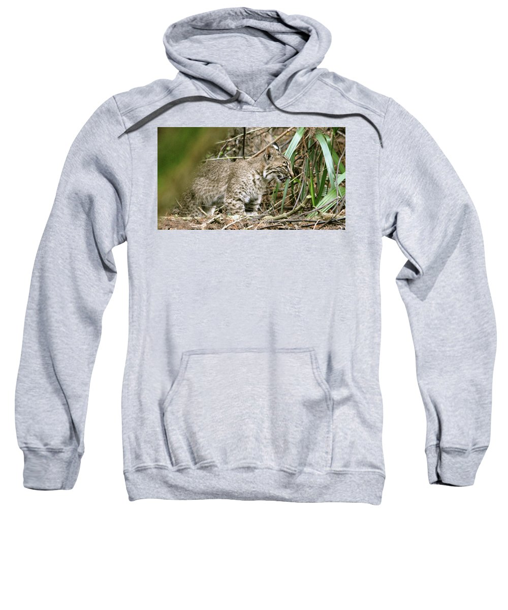 Bobcat Sweatshirt featuring the pyrography Mother Bobcat by Sally Sperry