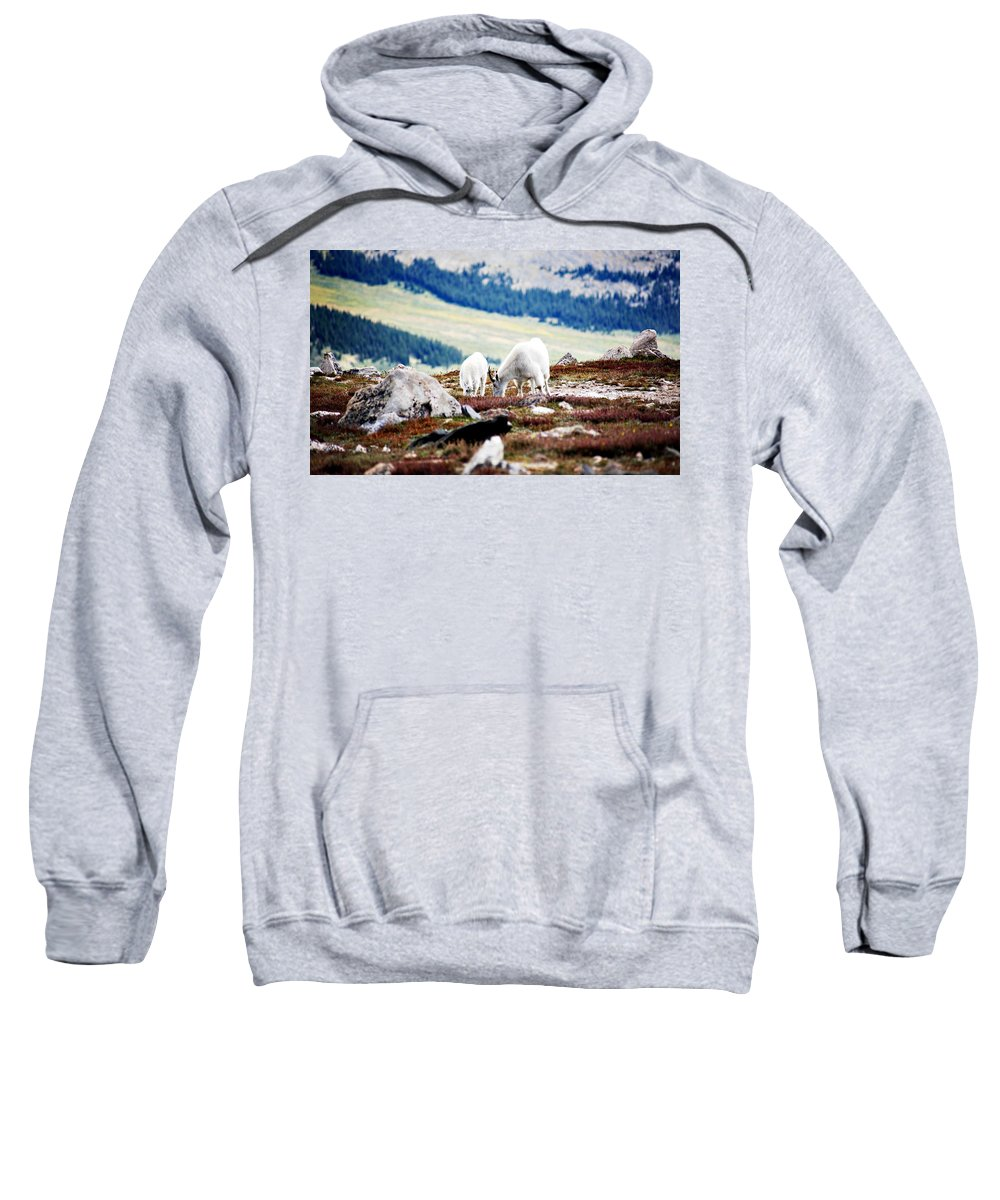 Animal Sweatshirt featuring the photograph Mountain Goats 2 by Marilyn Hunt