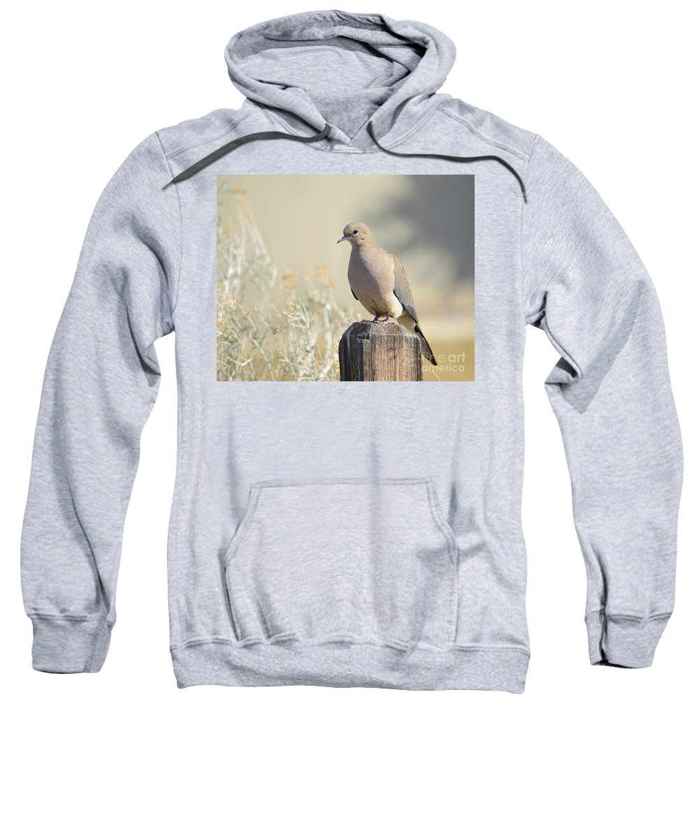 Animal Sweatshirt featuring the photograph Mourning Dove by Marv Vandehey