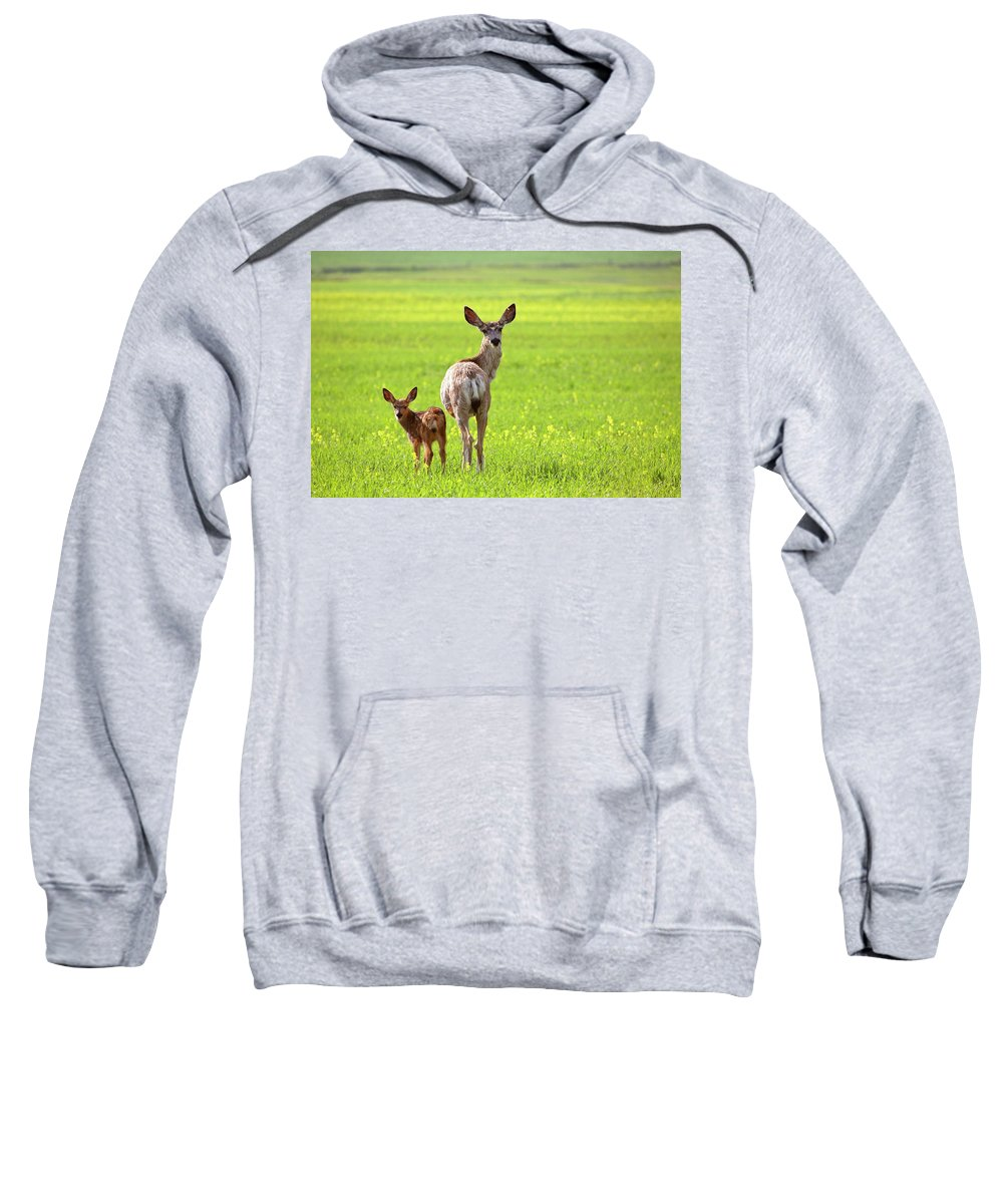 Mule Deer Sweatshirt featuring the digital art Mule Deer Doe And Fawn Looking Back Over Their Shoulders by Mark Duffy
