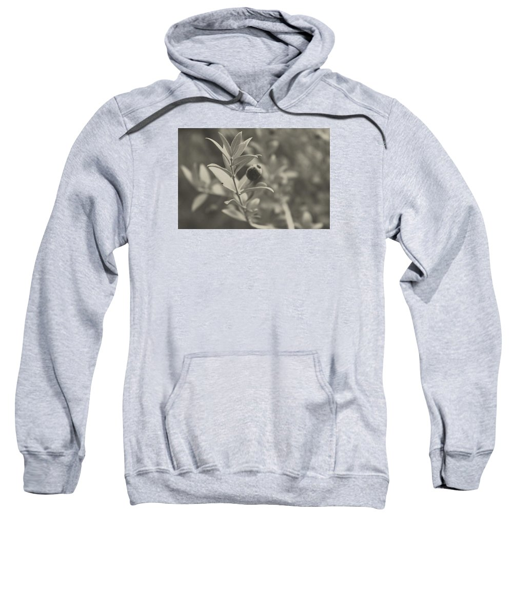 Nature Sweatshirt featuring the photograph Muted Beauty 3 by Sarah Jane Thompson