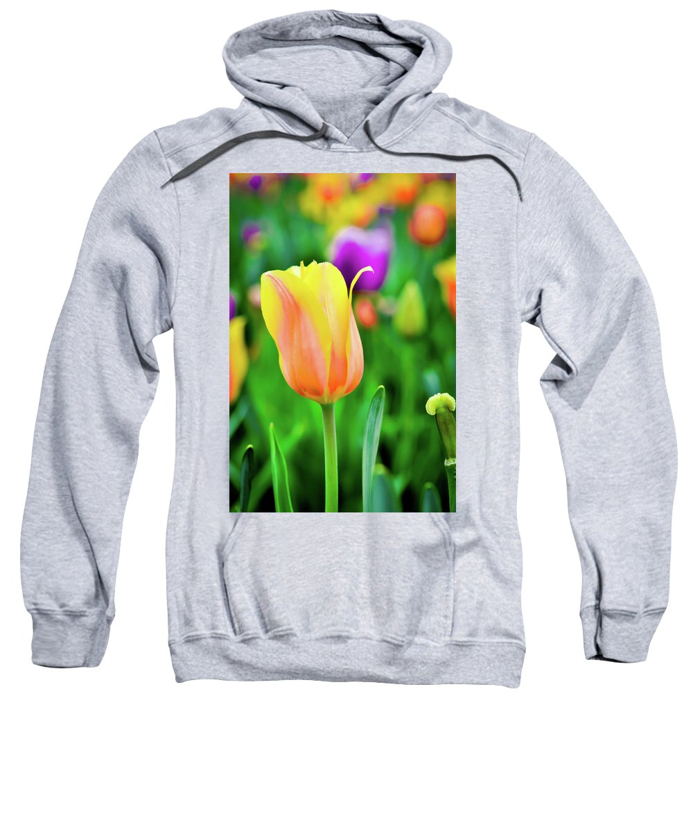 Tulip Sweatshirt featuring the photograph My First Tulip by Amazing Face Photography By Sharon Lee