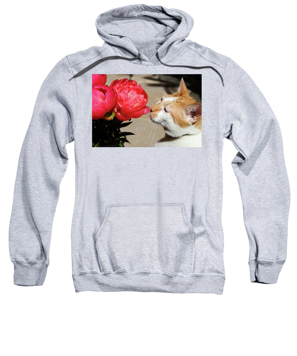 My Kitty In Love With A Peony Sweatshirt featuring the photograph My Kitty In Love With A Peony by Mariola Bitner