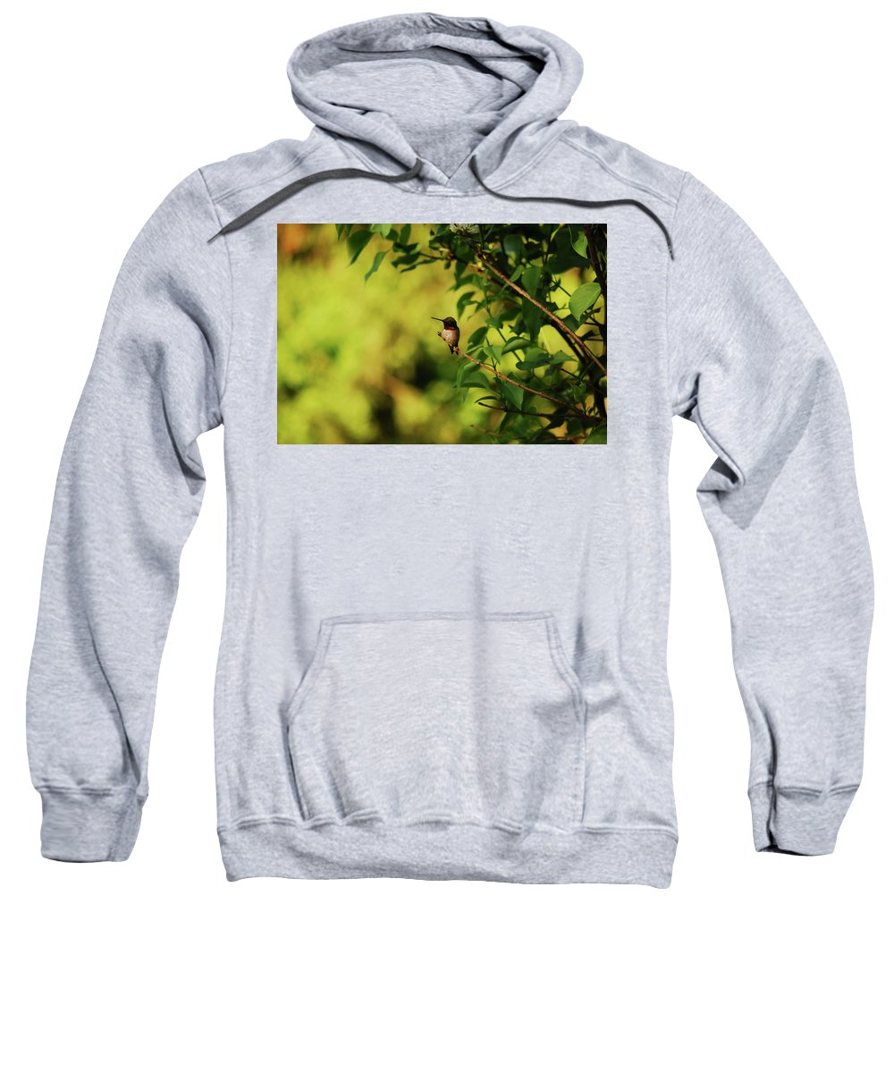 Hummingbird Sweatshirt featuring the photograph My Little Visitor by Lori Tambakis