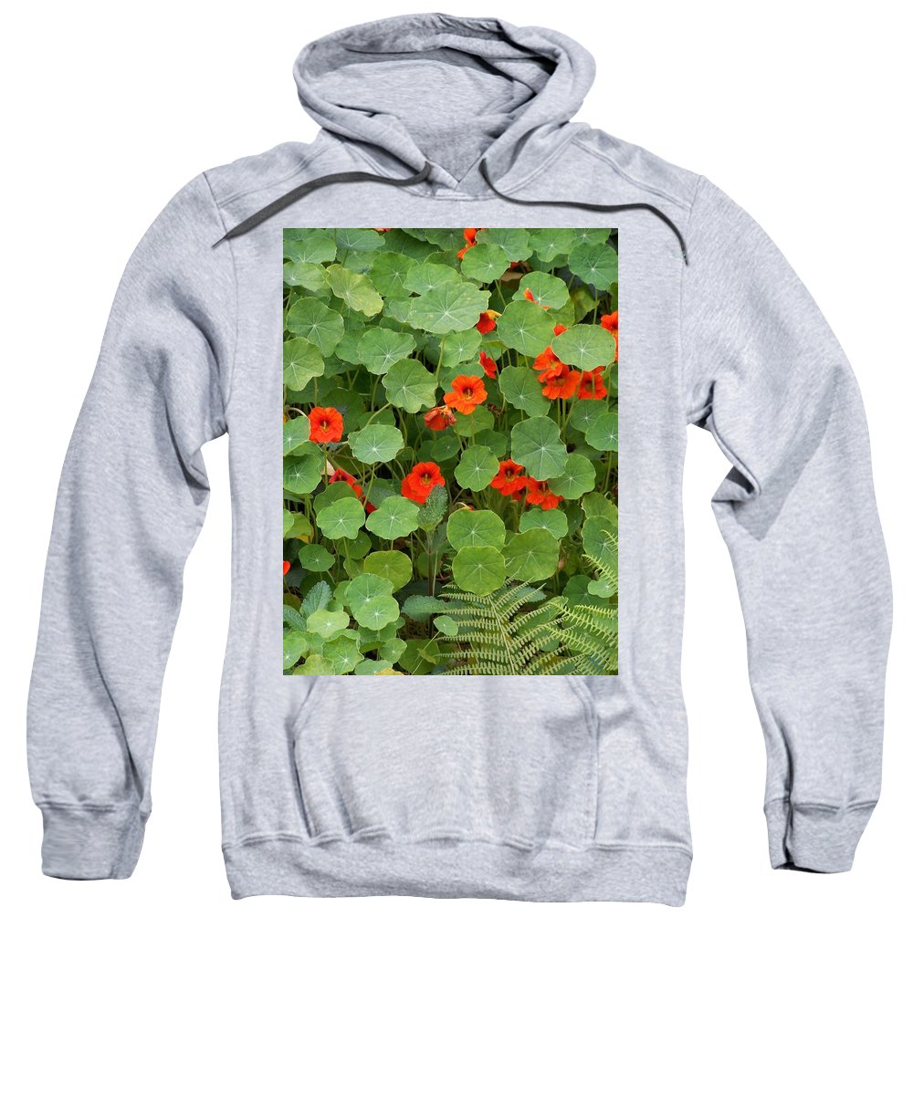 Nasturtiums Sweatshirt featuring the photograph Nasturtiums by Gale Cochran-Smith