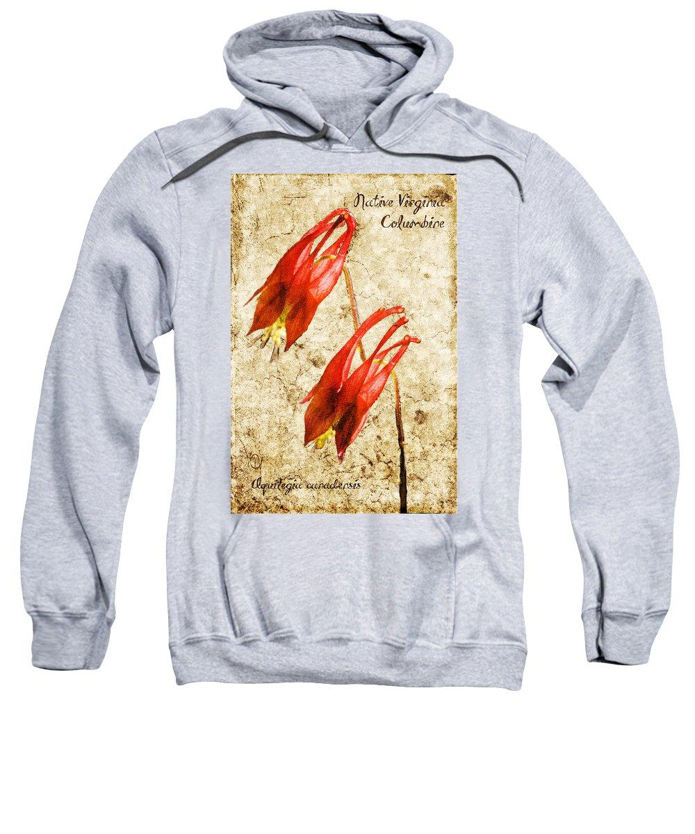Columbine Sweatshirt featuring the digital art Native Virginia Columbine by Teresa Mucha