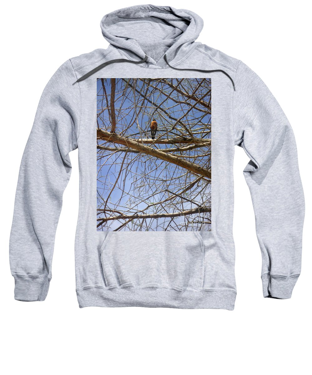 Nature Sweatshirt featuring the photograph Nature In The Wild - Annoucing Spring by Lucyna A M Green