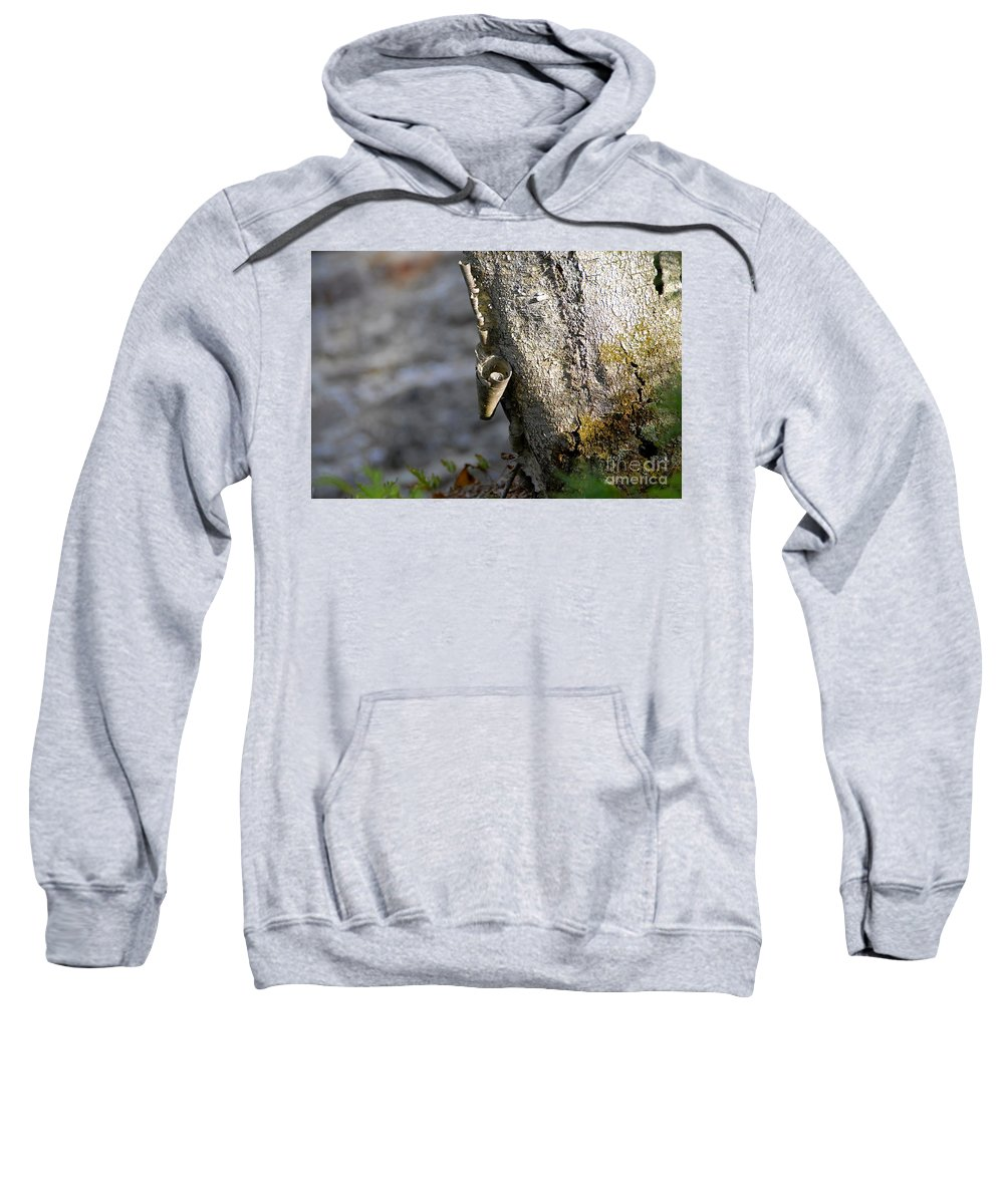 Wood Sweatshirt featuring the photograph Nature's Detail by David Lee Thompson