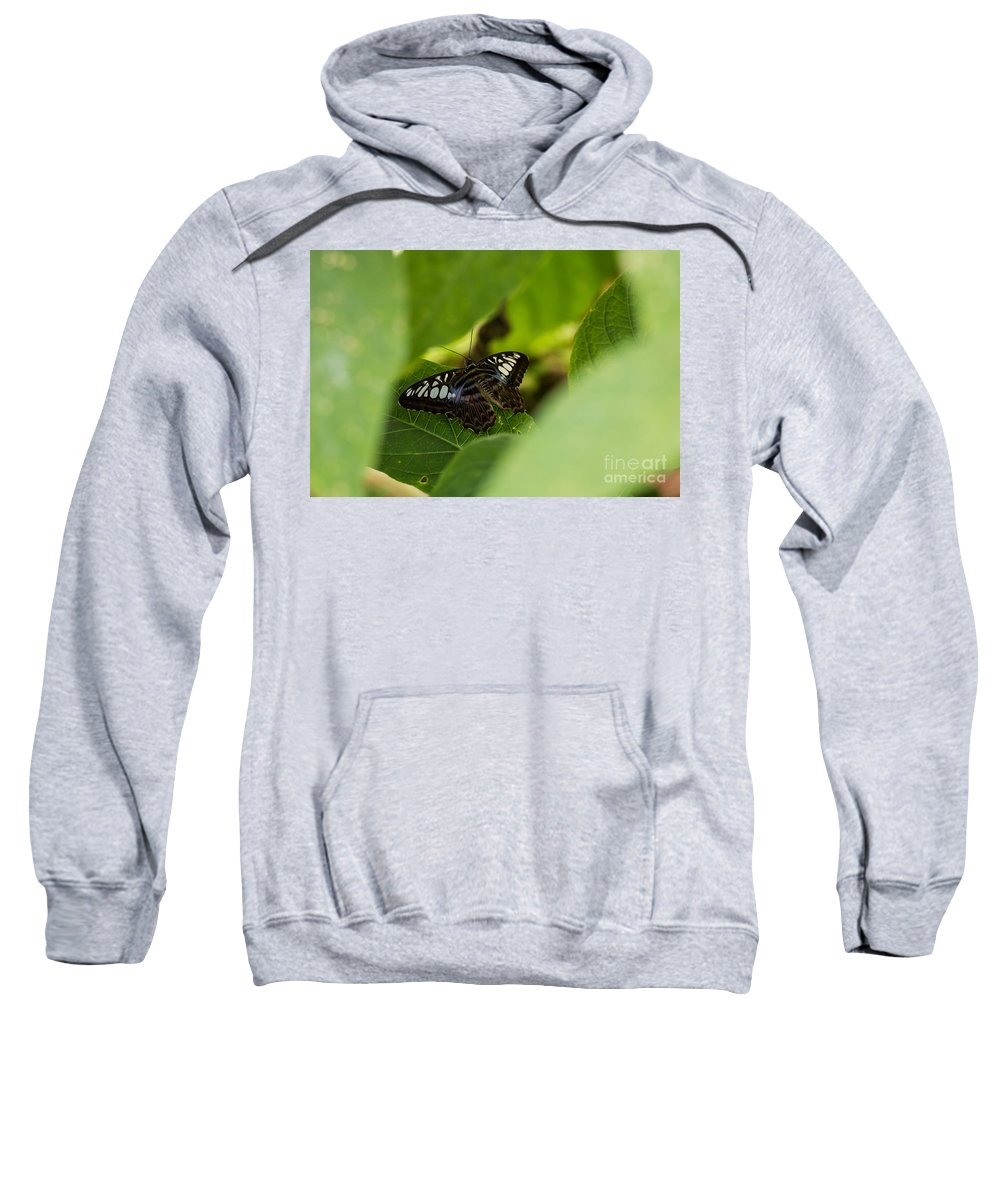Butterfly Sweatshirt featuring the photograph Natures Window by Wesley Farnsworth