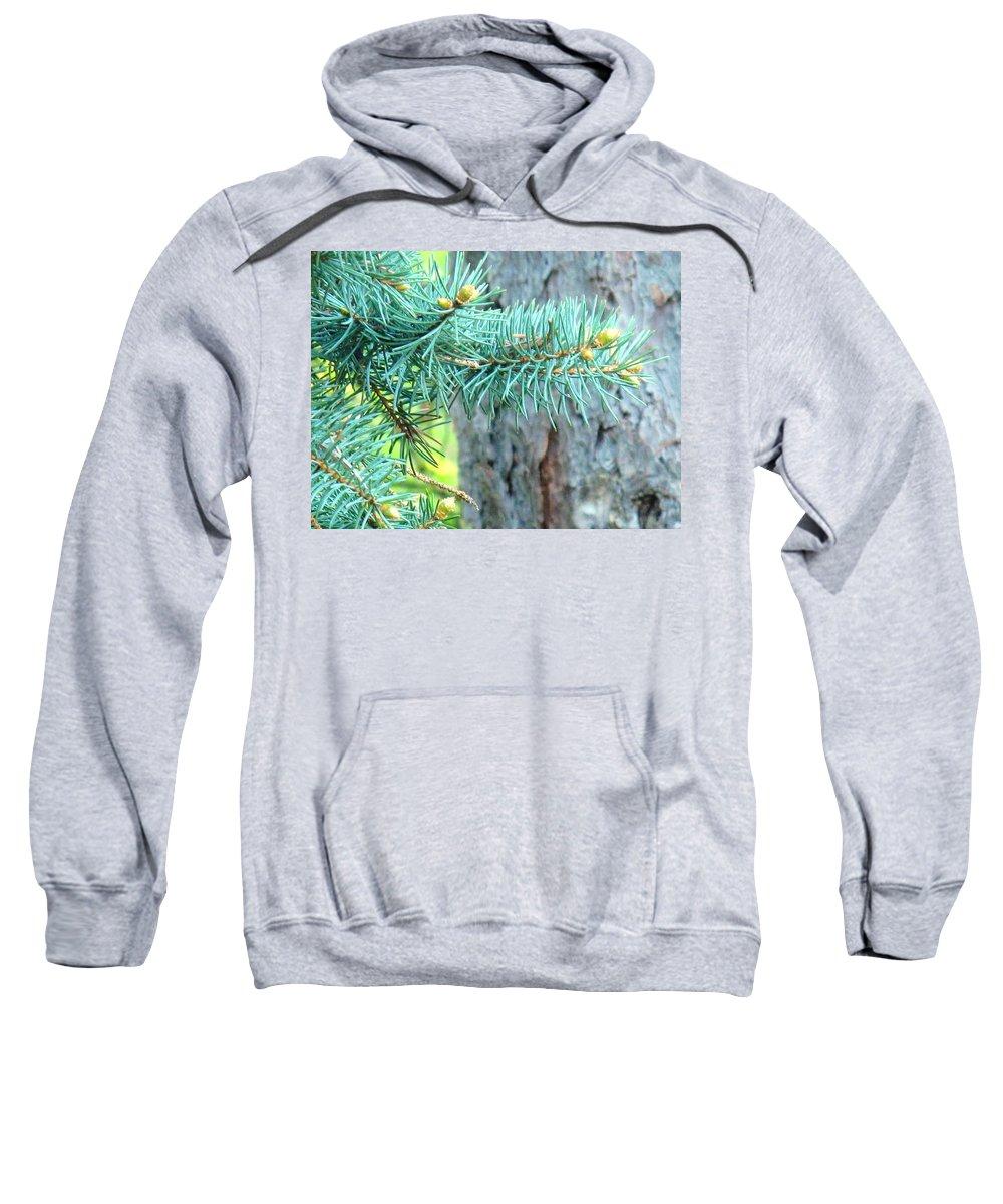 Pine Sweatshirt featuring the photograph Needles by Ian MacDonald